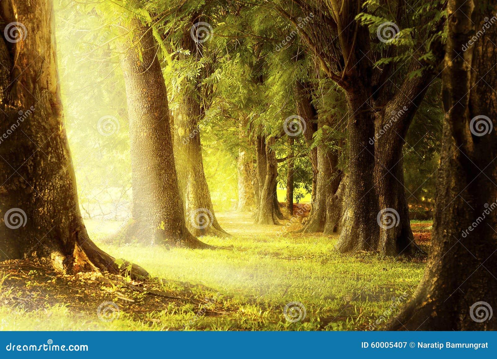 Ilumine através dos entalhes das árvores na floresta