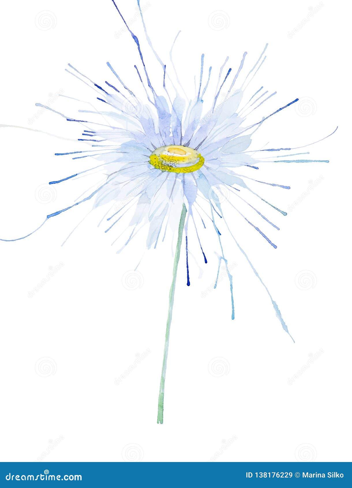 Ilustração abstrata da camomila da aquarela Isolado no fundo branco