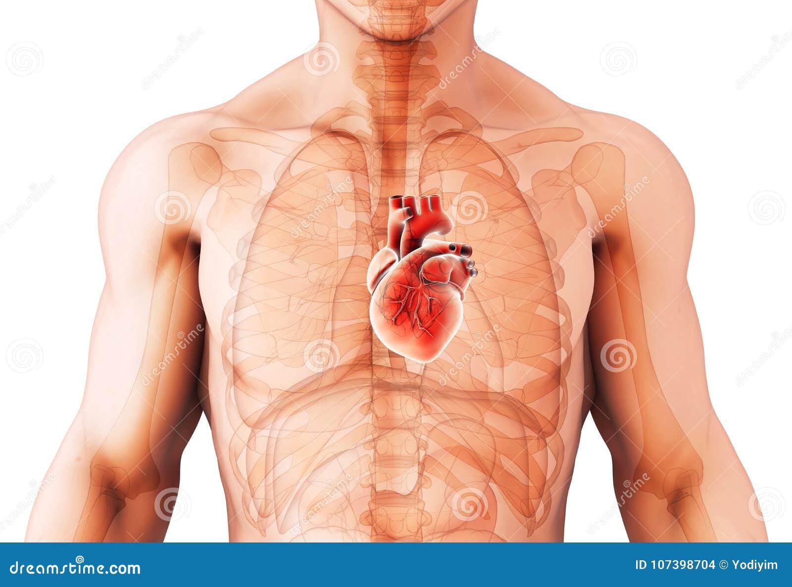 Ilustração 3D do coração, conceito médico