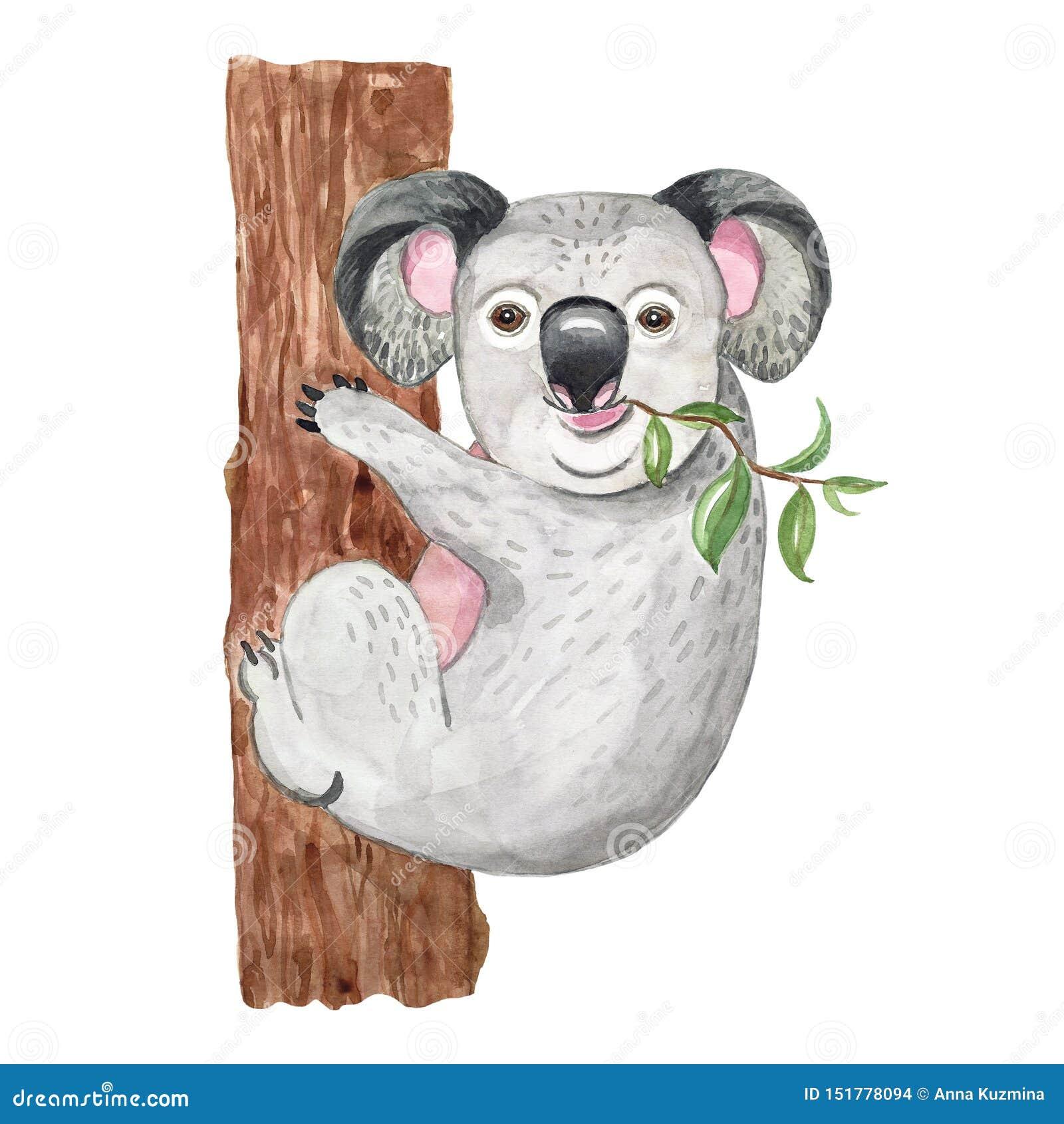 Ilustração da aquarela com coala bonito Animal australiano exótico, isolado Cópia exótica da selva dos desenhos animados, arte do