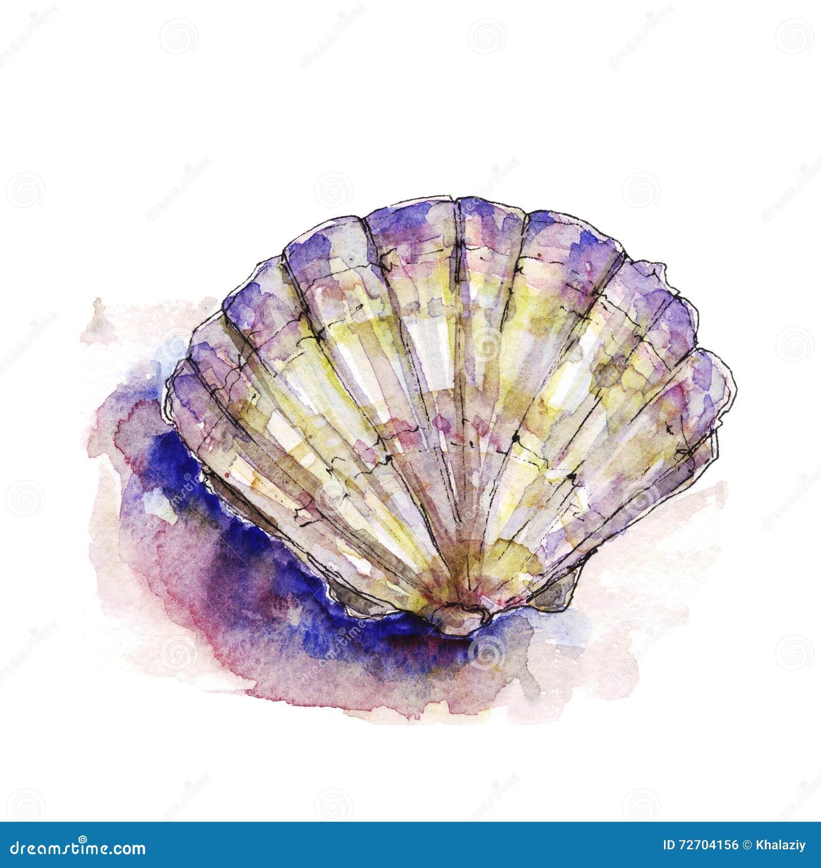 Ilustração da aquarela de shell de um mar