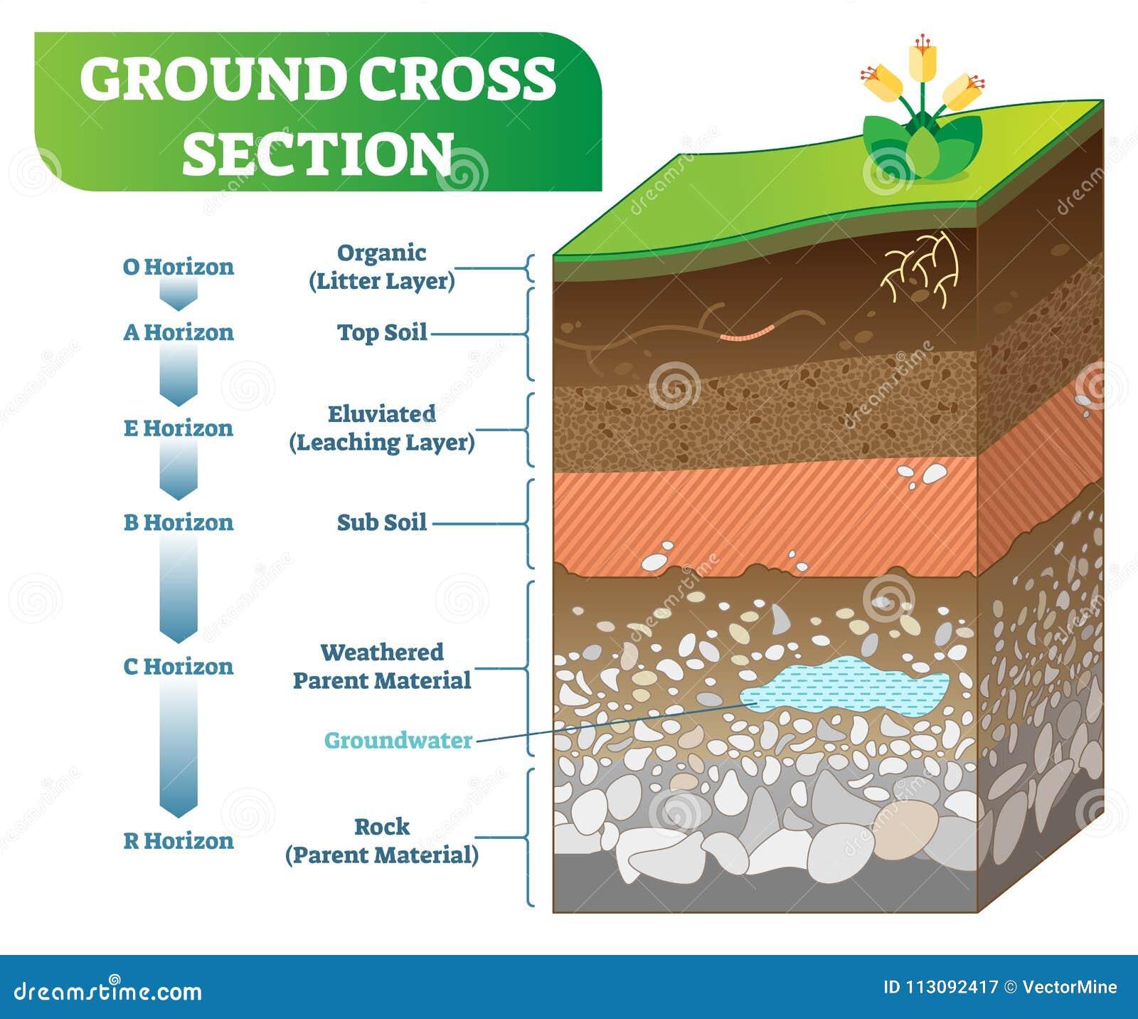 Ilustração de seção transversal à terra do vetor com orgânico, solo superficial, subsolo e outros níveis do horizonte