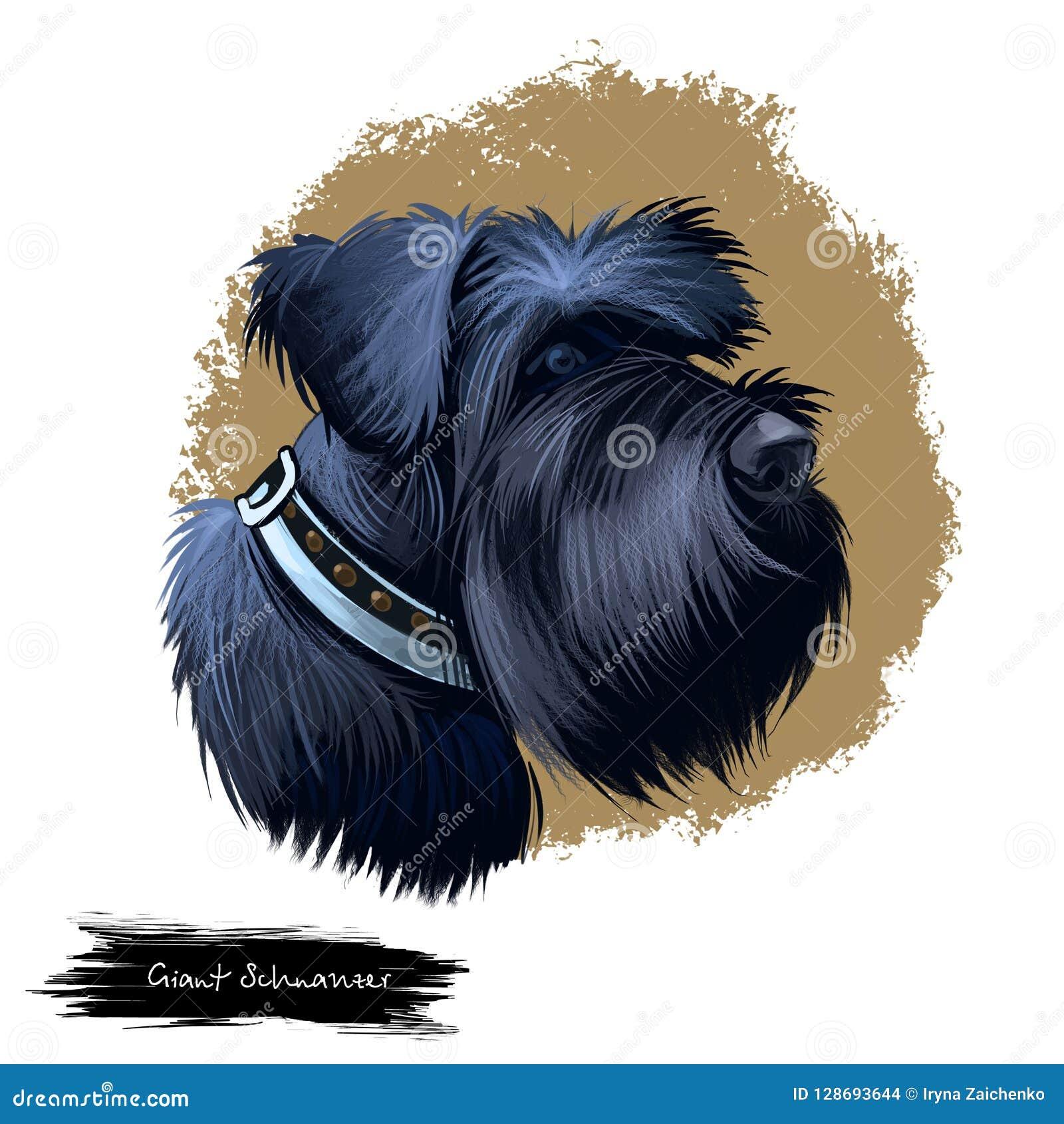 Ilustração digital da arte da raça do cão do Schnauzer gigante isolada no branco Retrato popular do cachorrinho com texto Mão bon