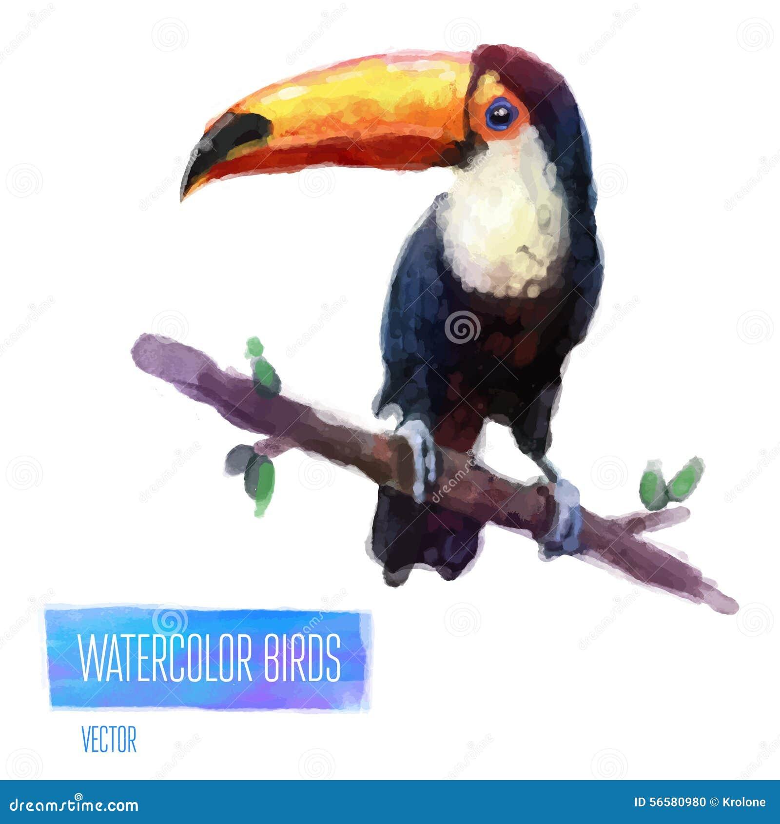 Ilustração do estilo da aquarela do vetor do pássaro