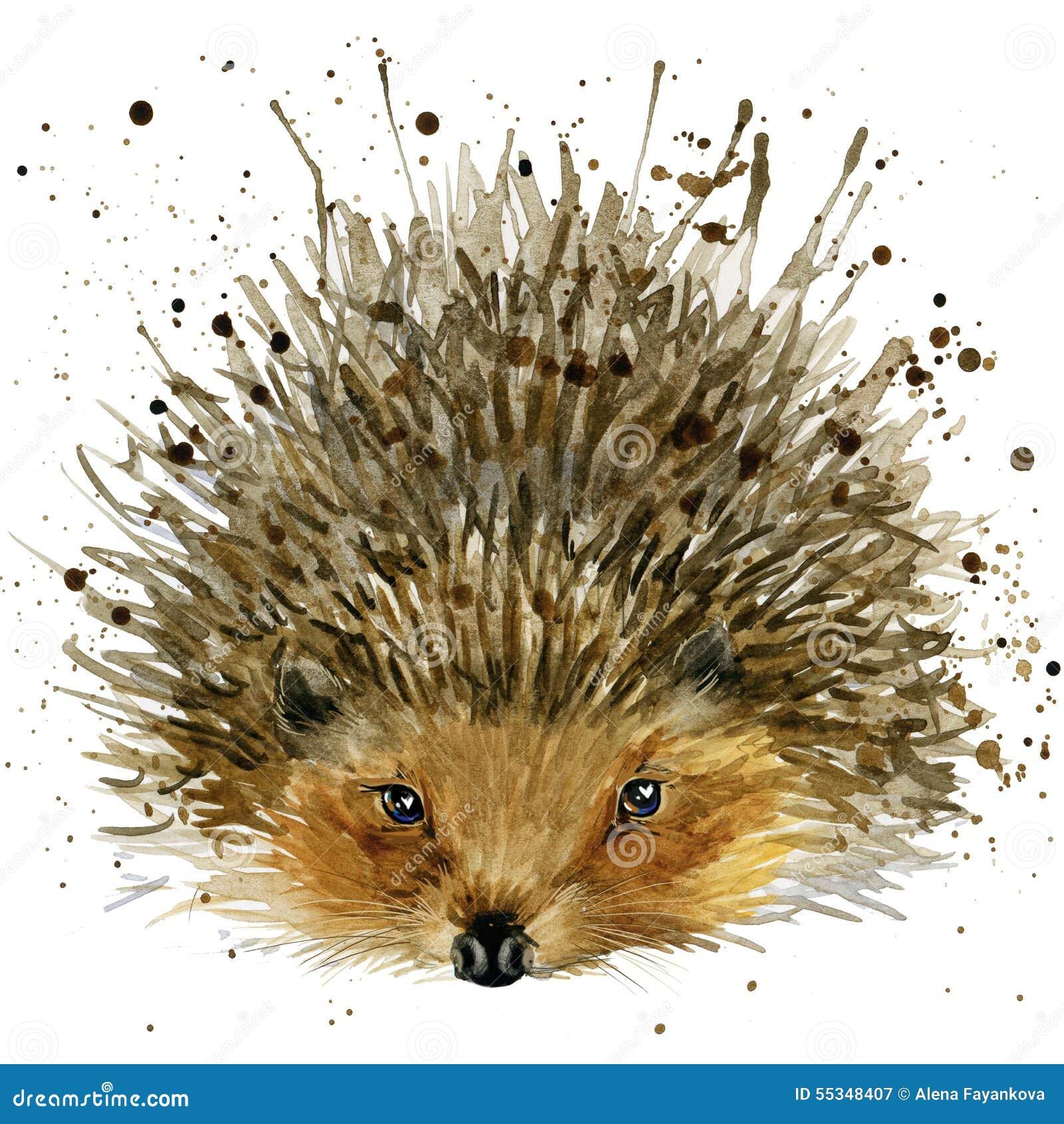 Ilustração do ouriço com fundo textured aquarela do respingo