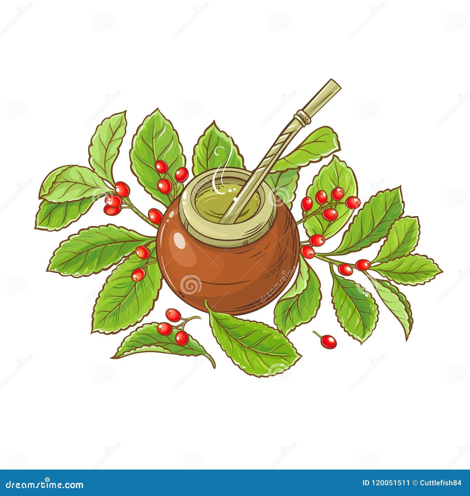Ilustração do vetor do chá do companheiro