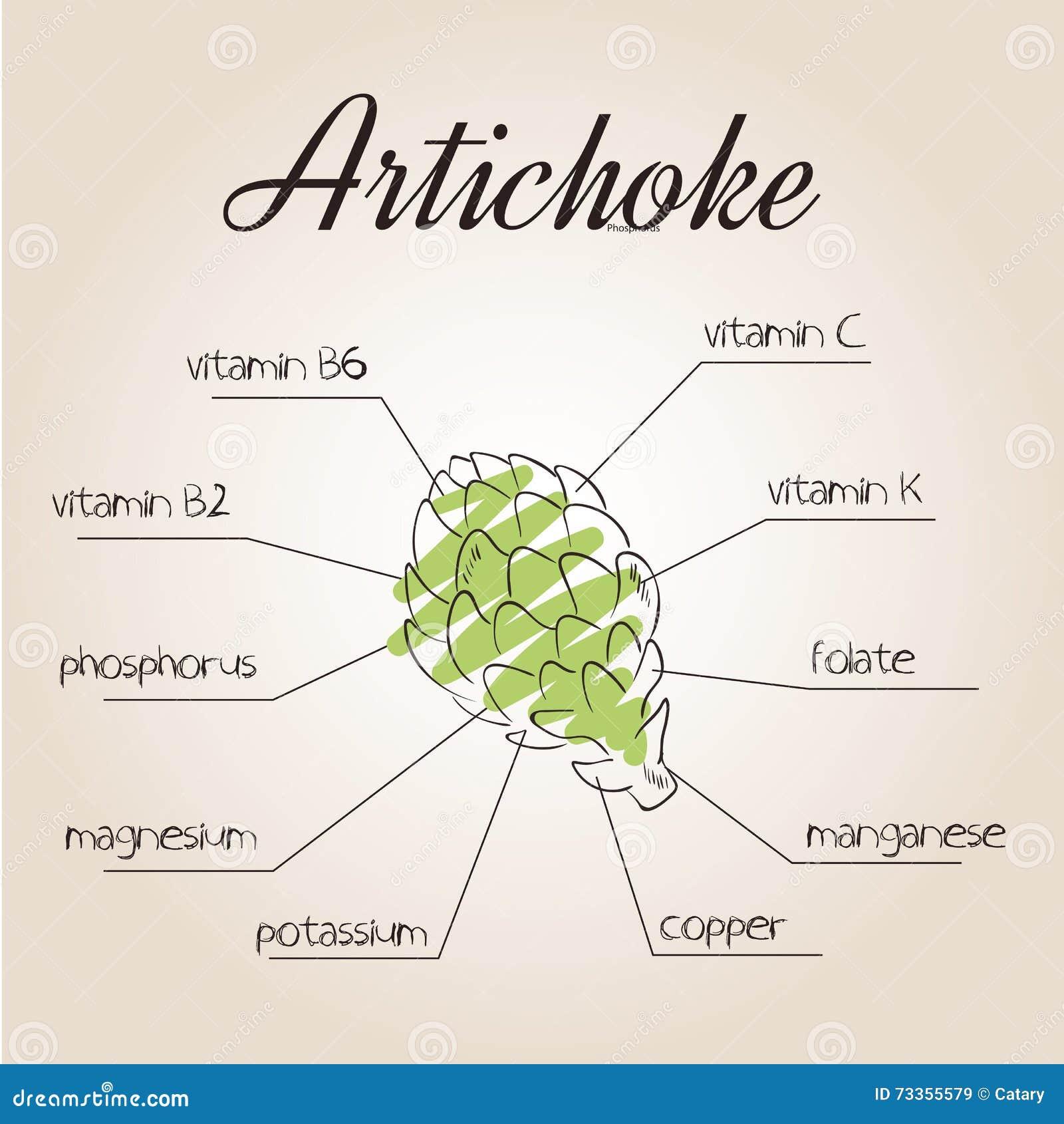 Ilustração do vetor da lista dos nutrientes para a alcachofra