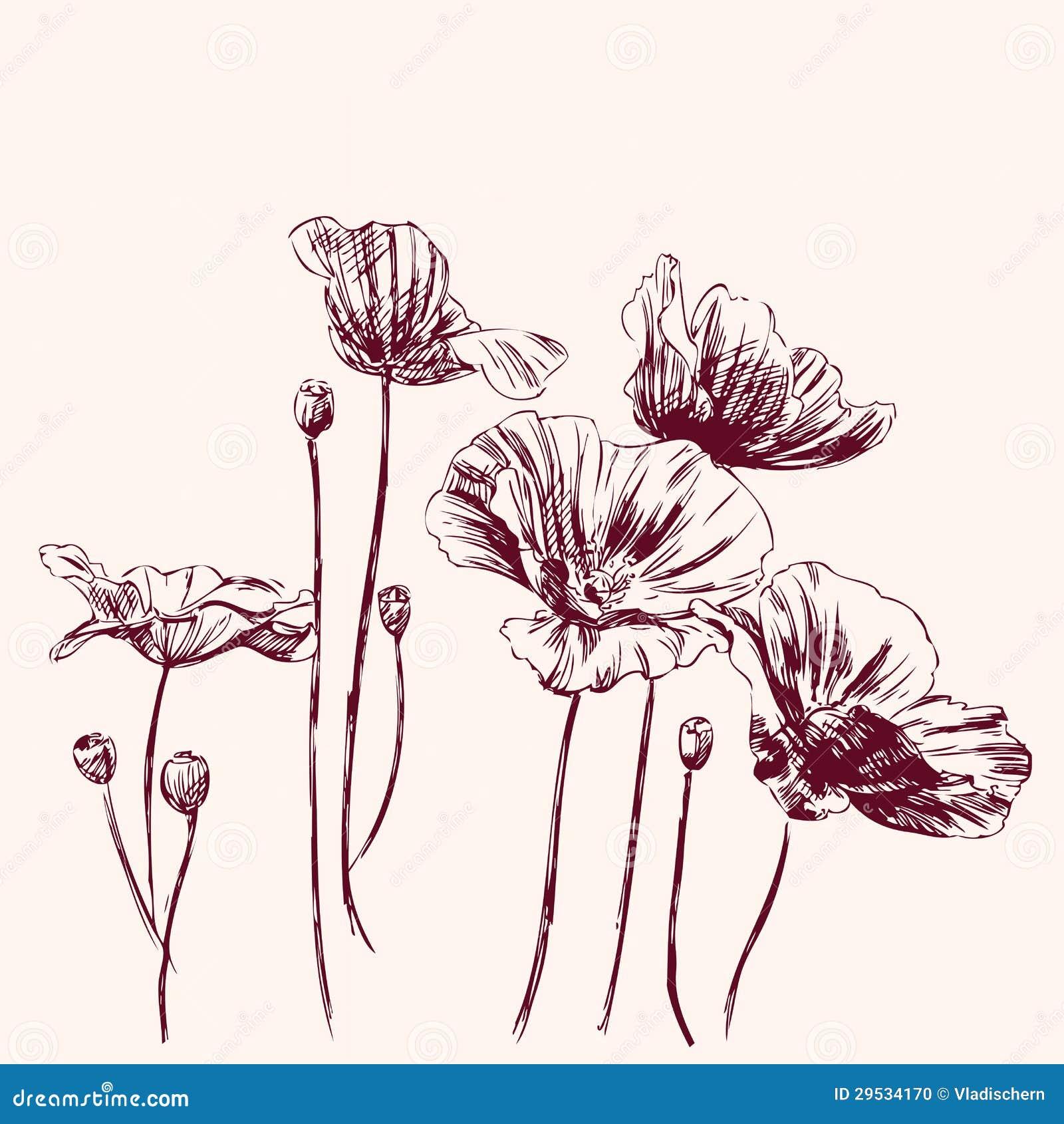 Ilustração do vetor das flores das papoilas