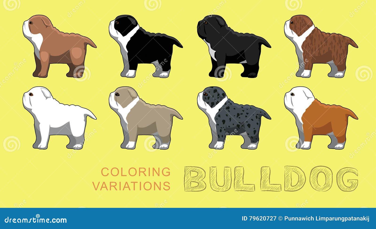 Ilustração do vetor das variações da coloração do buldogue do cão