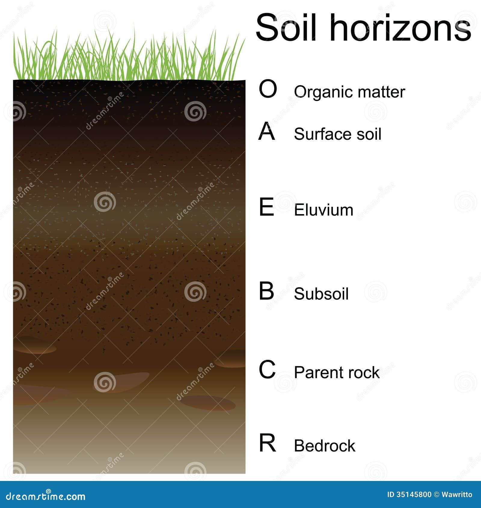 Worksheets Soil Horizons Worksheet soil horizons worksheet dominantni info do vetor de horizontes solo camadas foto horizons