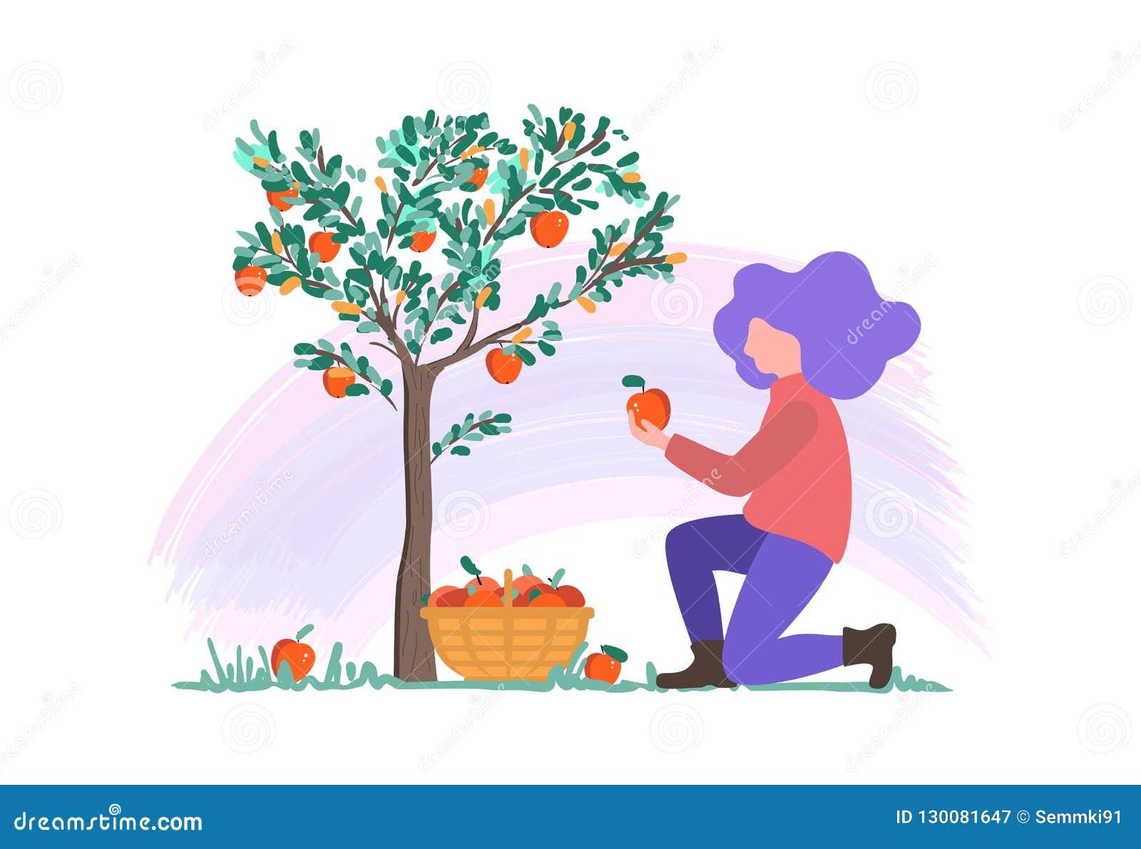 Ilustração do vetor de uma moça que escolhe maçãs no jardim, colhendo o projeto liso