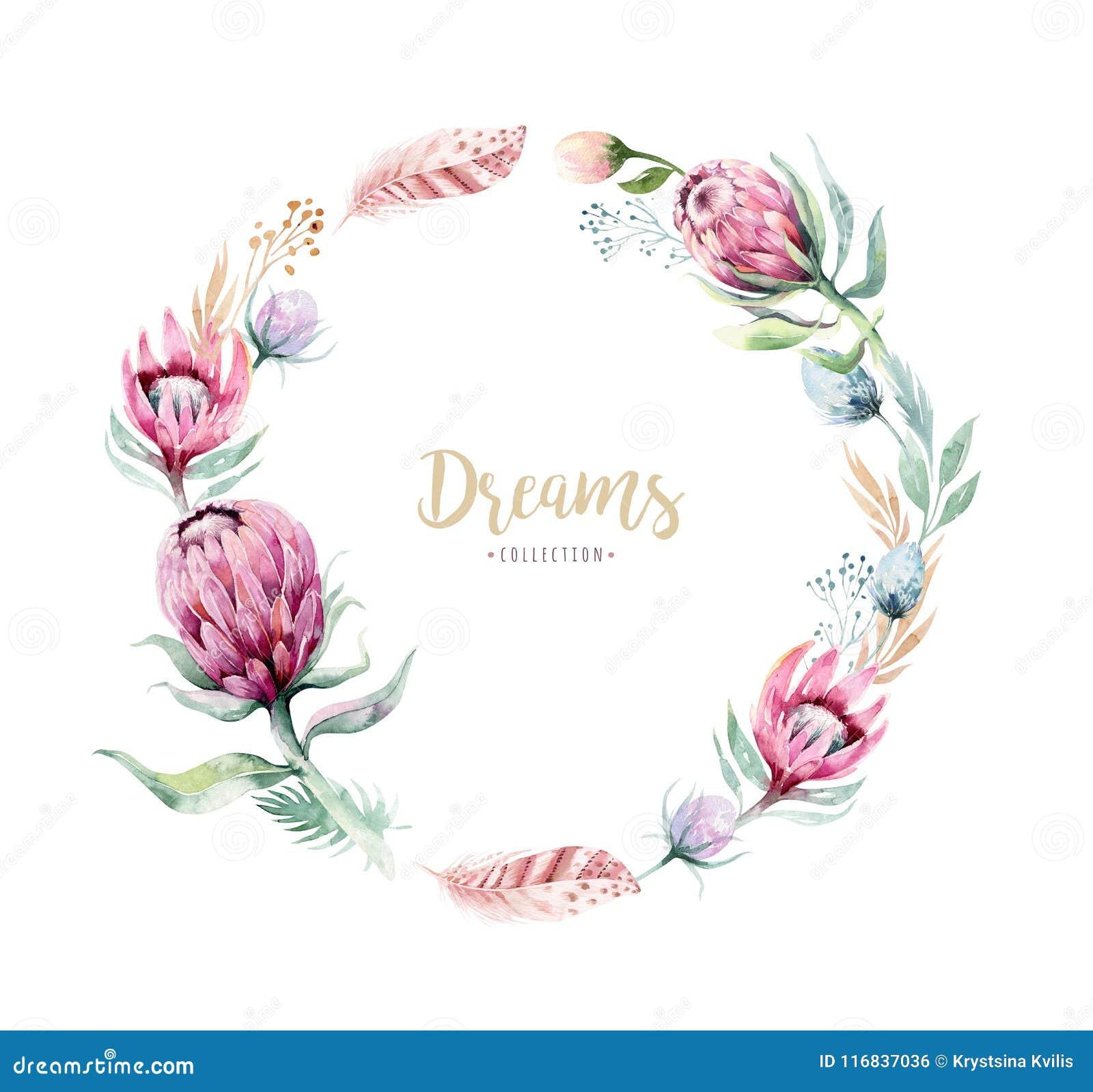 Ilustracao Floral Isolada Desenho Da Aquarela Da Mao Com Rosa