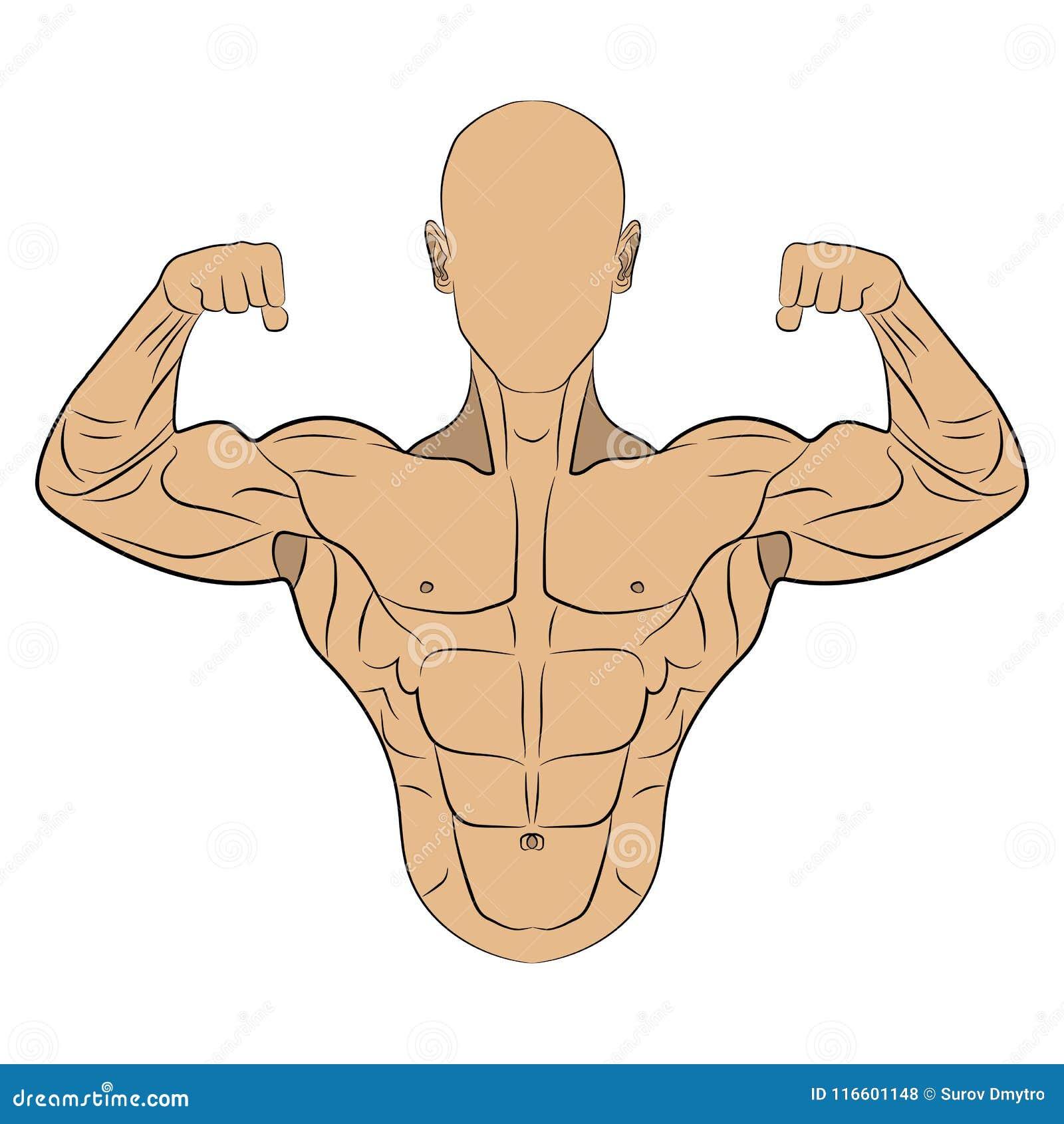 Ilustracao Inflada Do Desenho Do Homem Do Musculo Do Corpo
