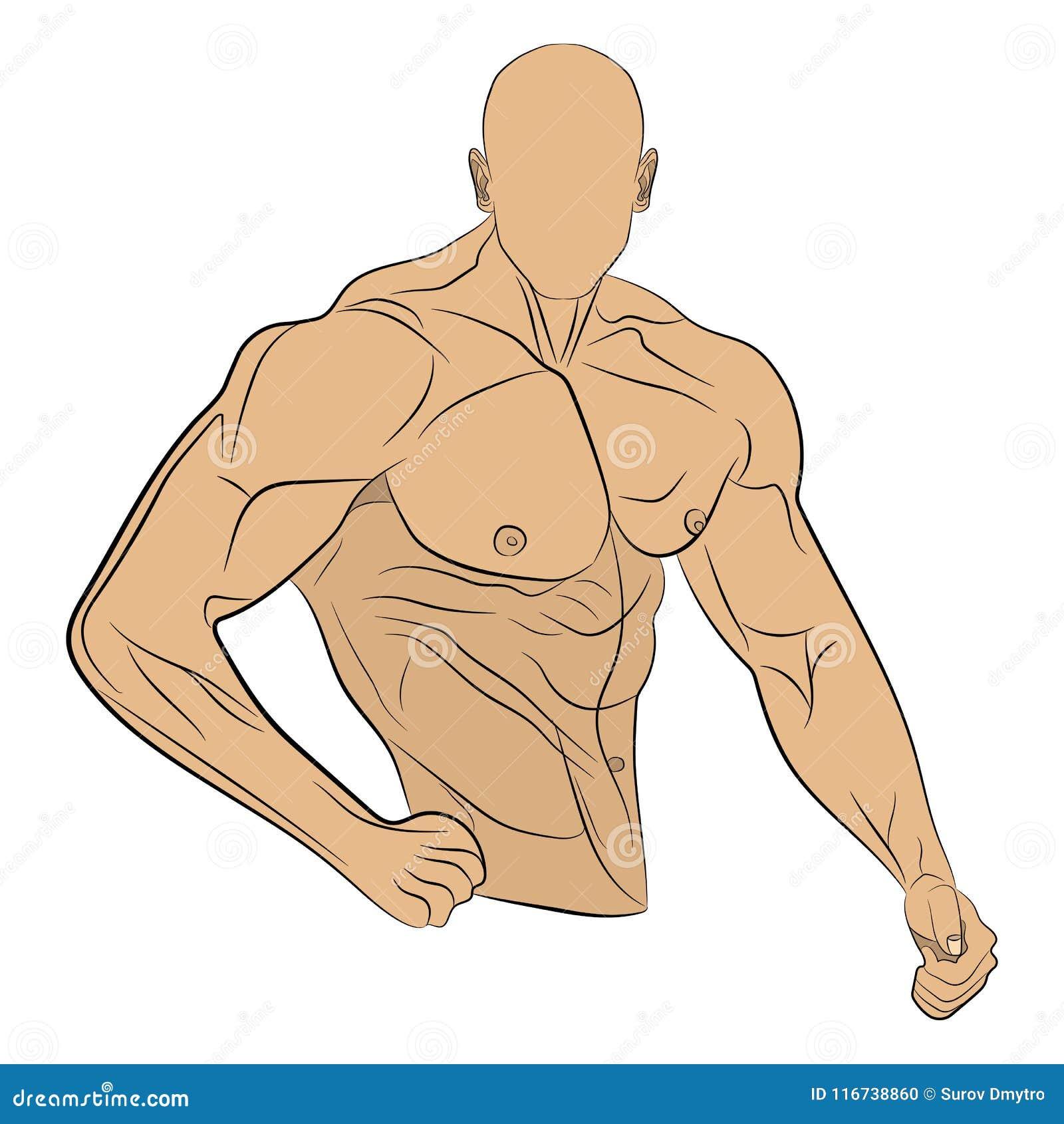 Ilustracao Inflada Do Desenho Do Vetor Do Homem Do Musculo Do