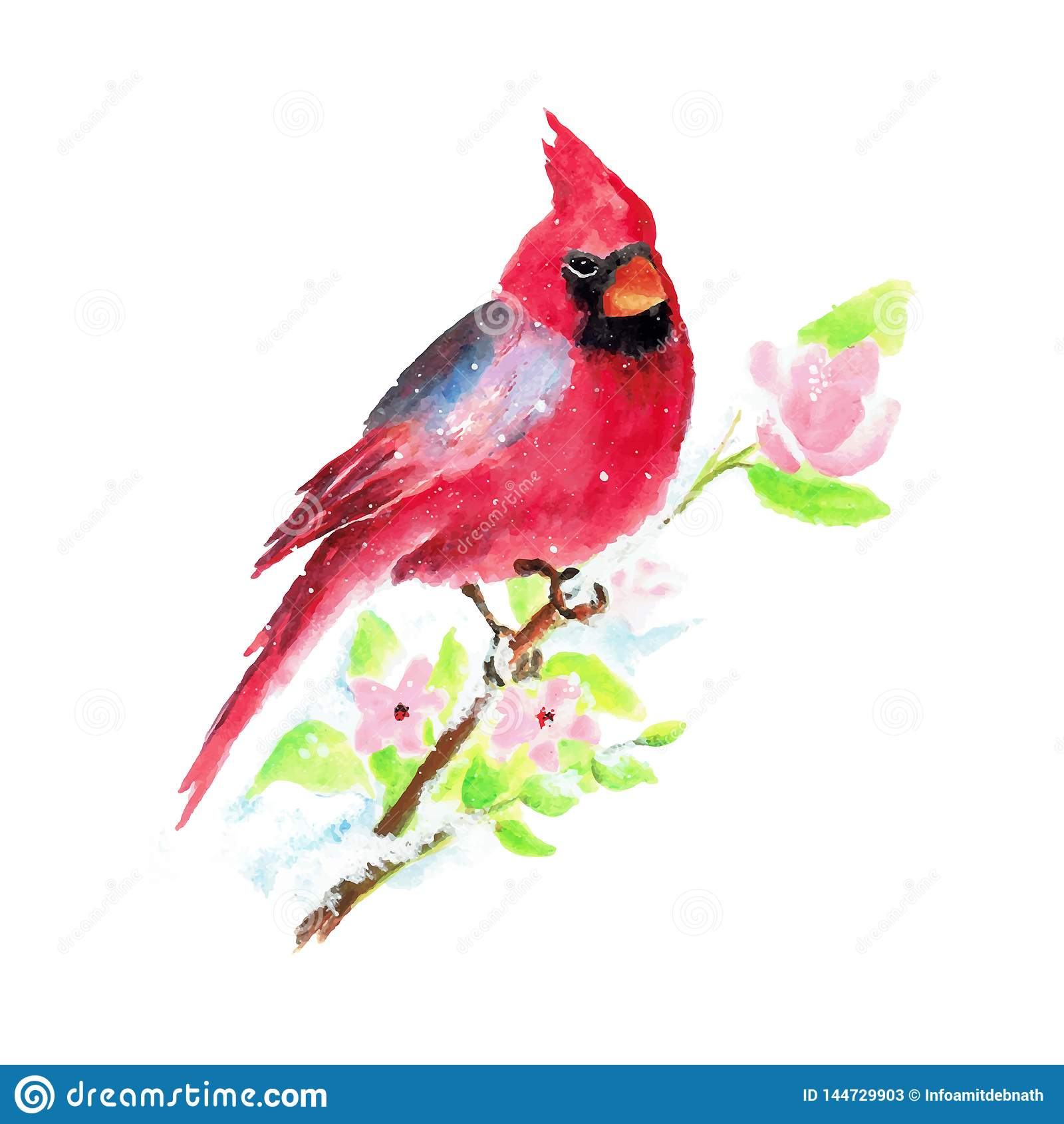 Ilustração pintado à mão do vetor do pássaro do Natal da aquarela