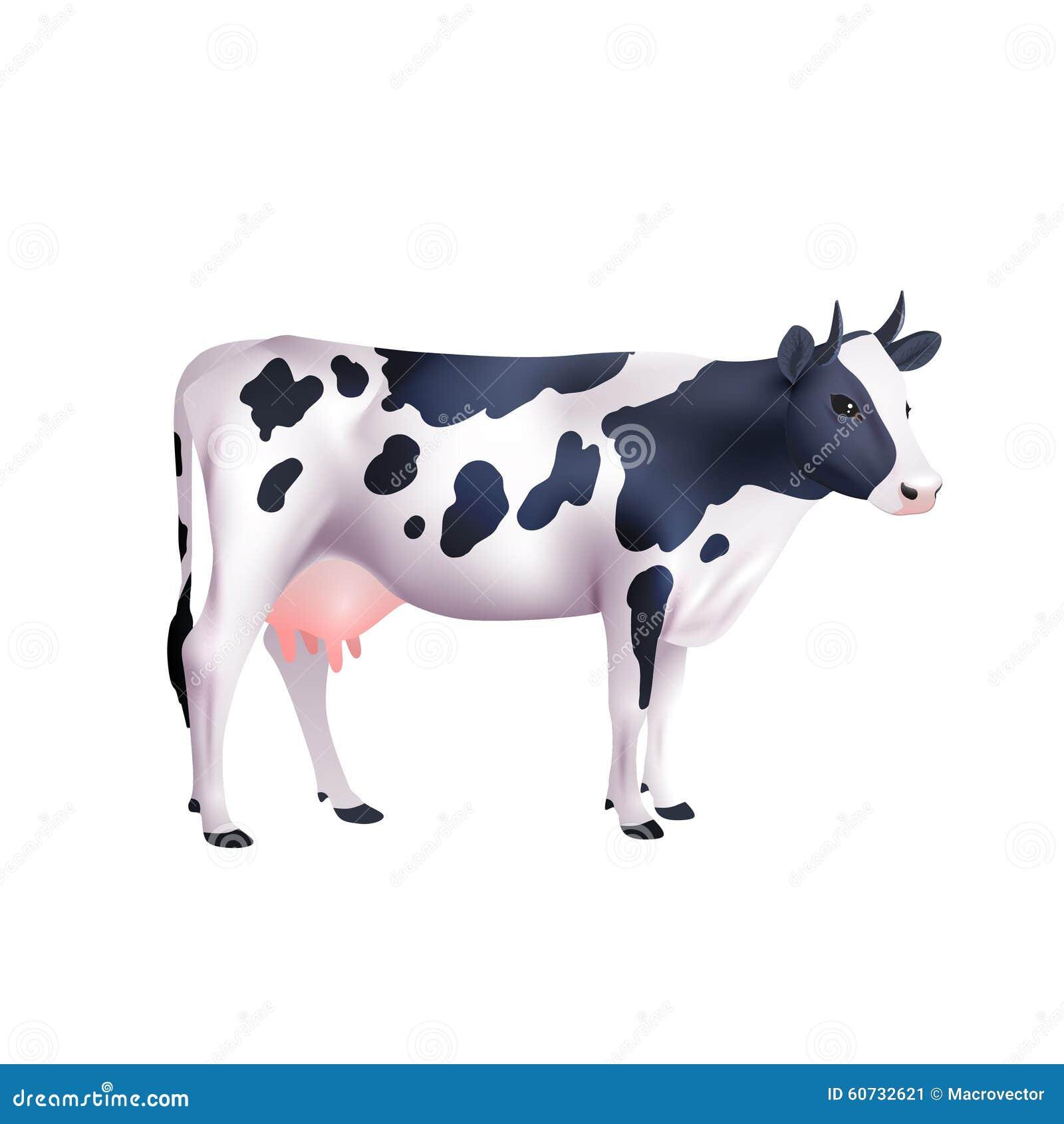 Ilustração realística da vaca