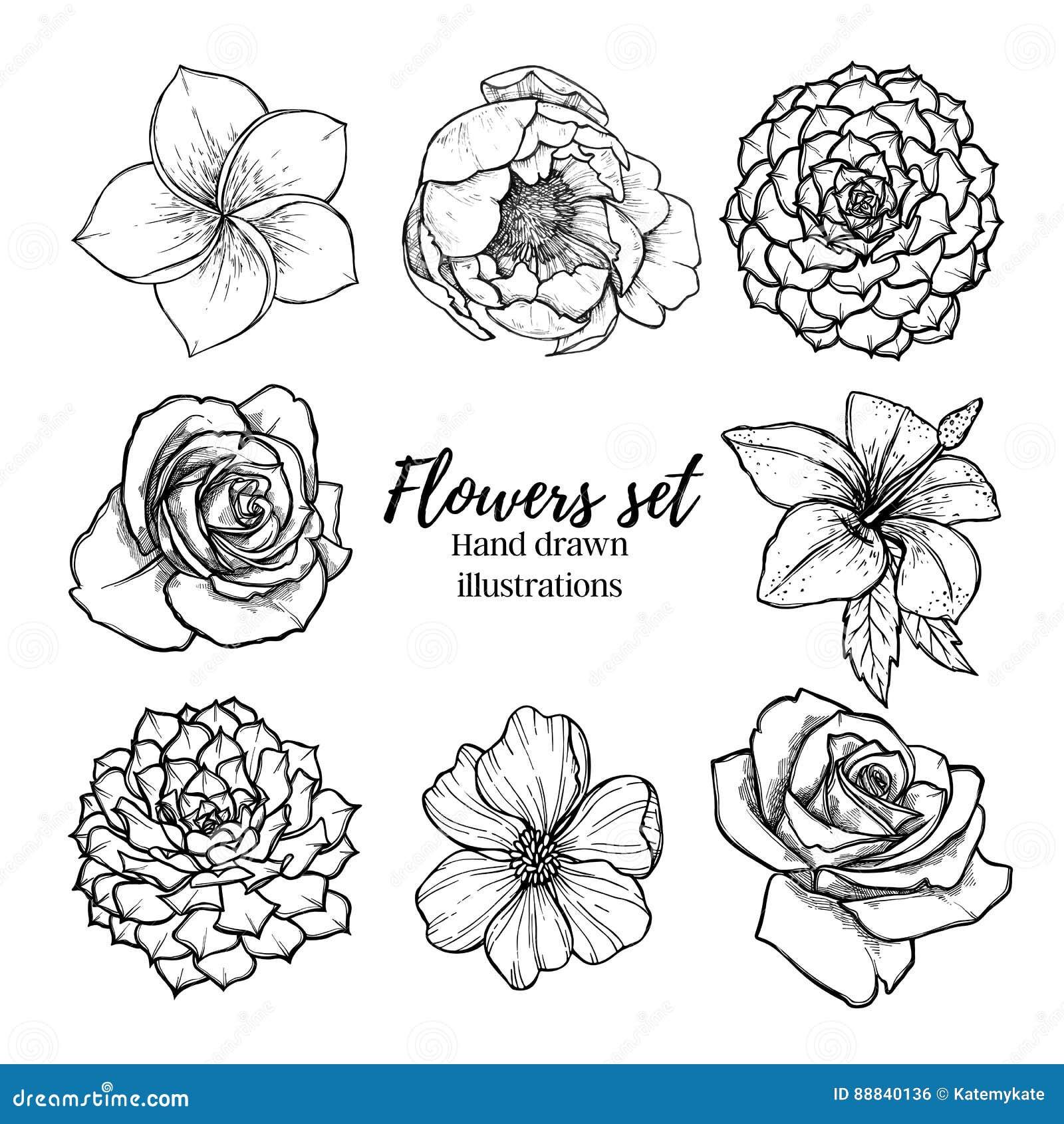 Ilustração tirada mão do vetor - a planta carnuda ajustada flores, aumentou, p