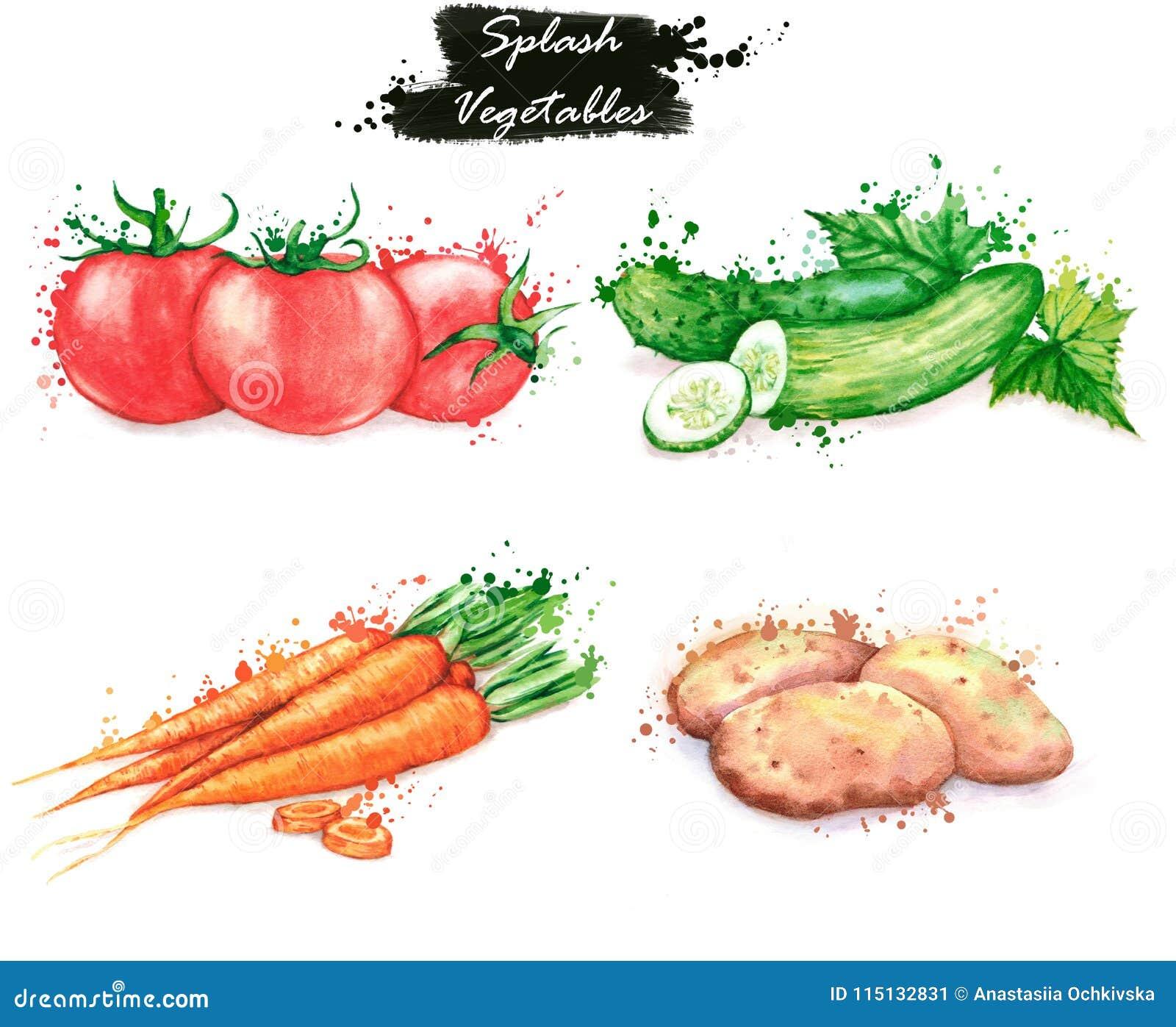 Ilustrações desenhados à mão do alimento da aquarela Desenhos isolados dos legumes frescos - tomates, pepinos, cenoura e batatas
