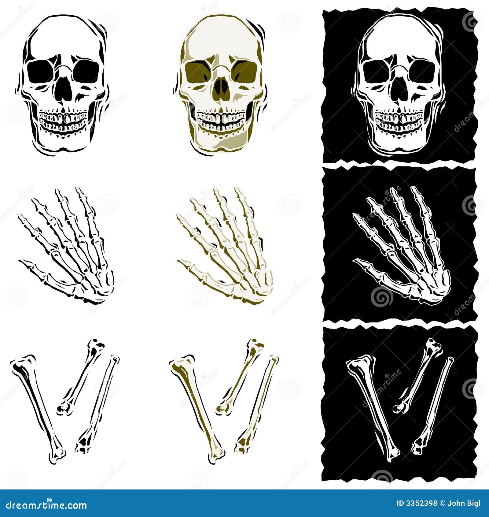 Ilustrações do osso