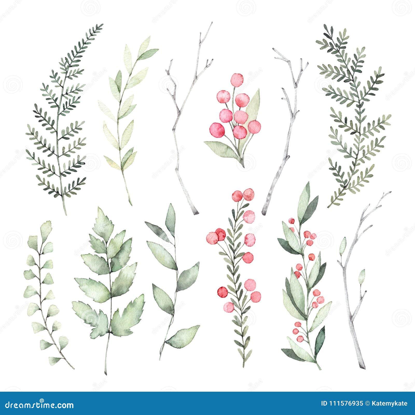 Ilustrações tiradas mão da aquarela Clipart botânico Grupo de g