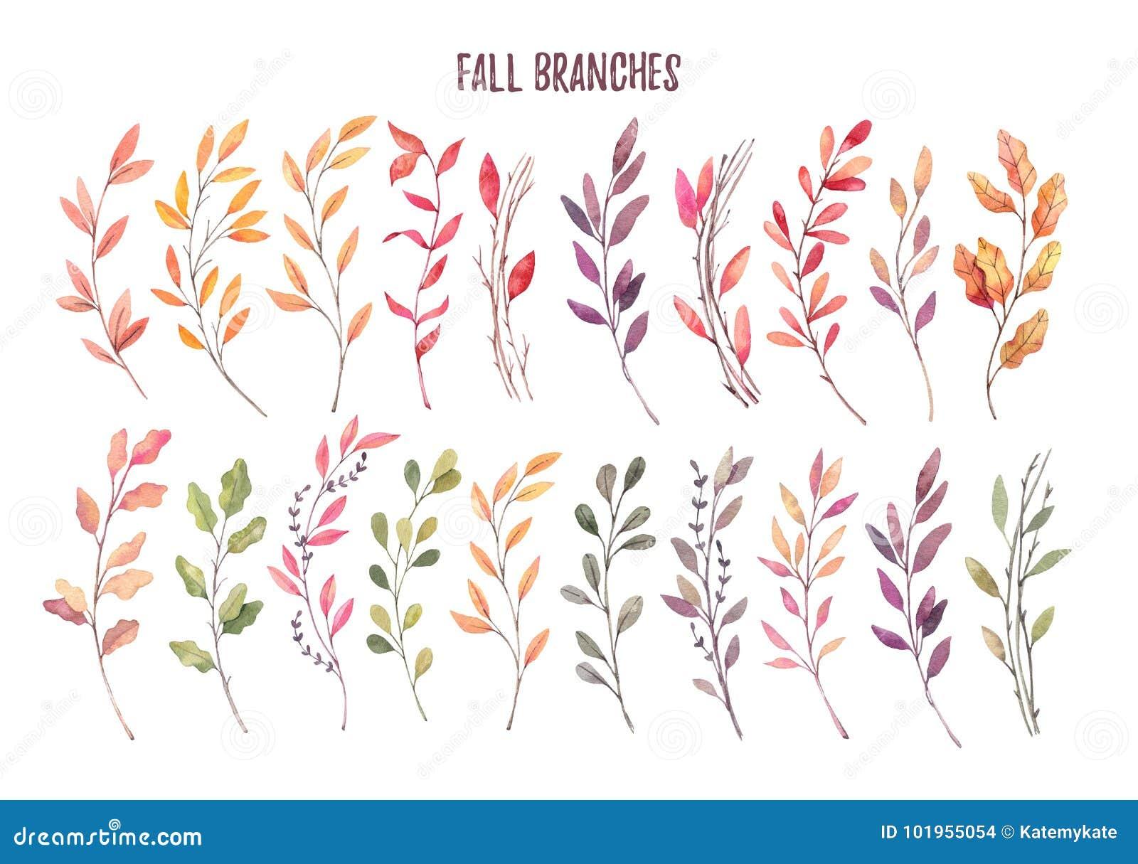 Ilustrações tiradas mão da aquarela Clipart de Autumn Botanical S