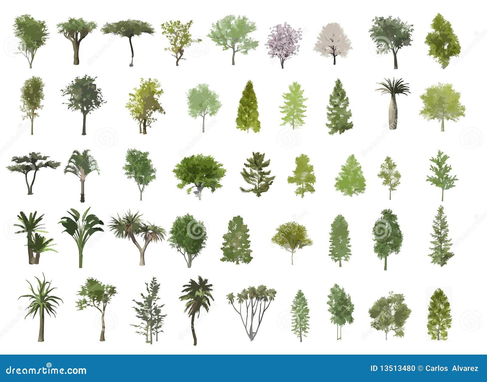 Ilustración de los árboles