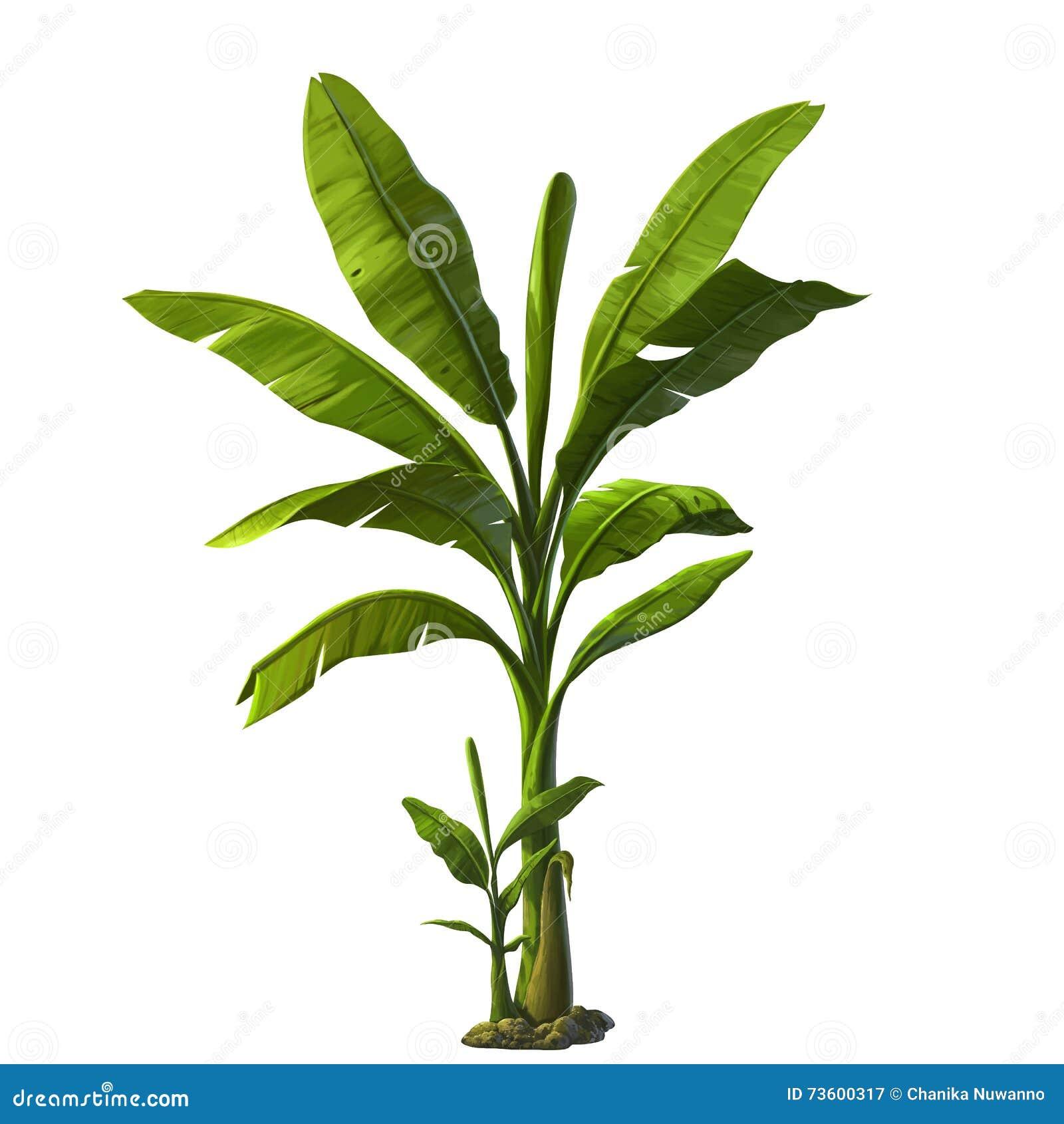 Ilustracja bananowy drzewo