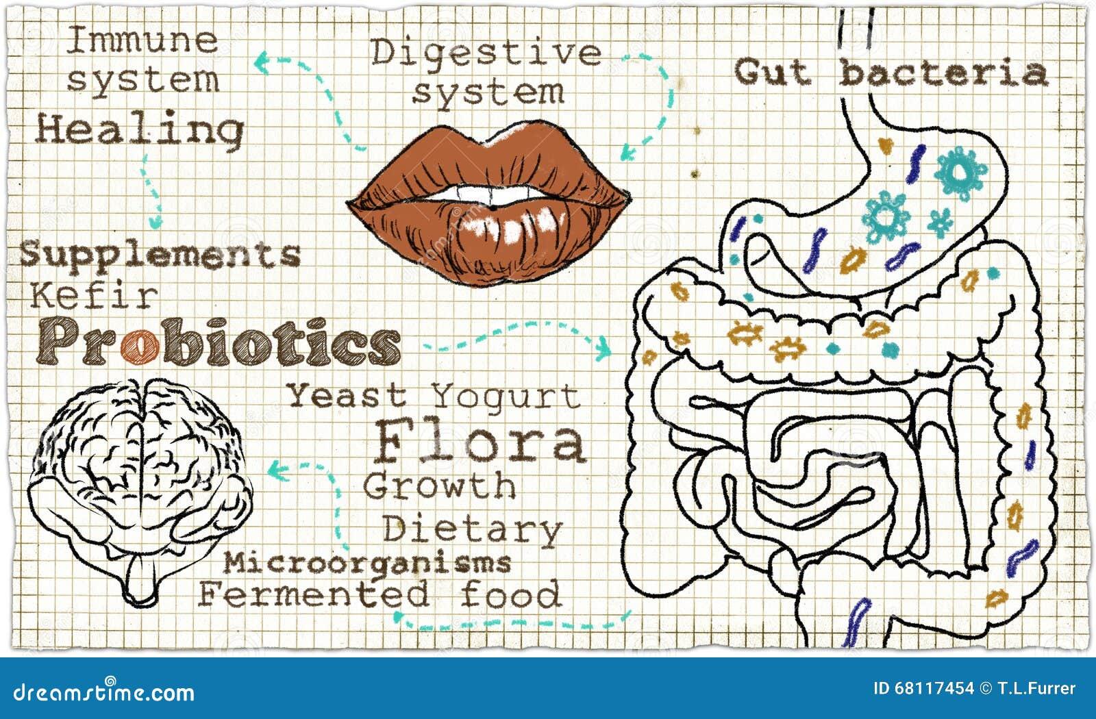 Ilustracja o Probiotics i Trawiennym systemu