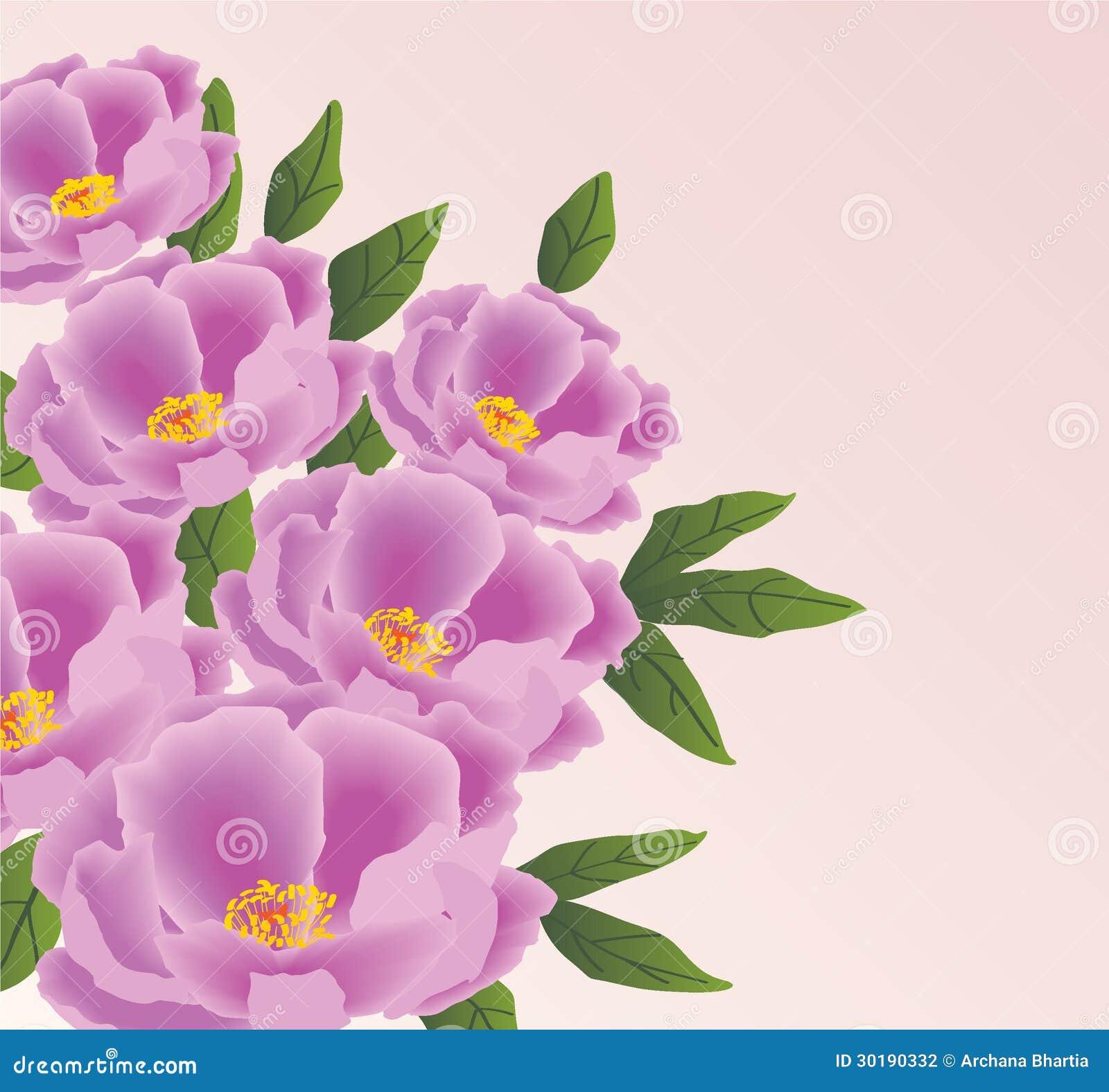 Peonia kwiaty