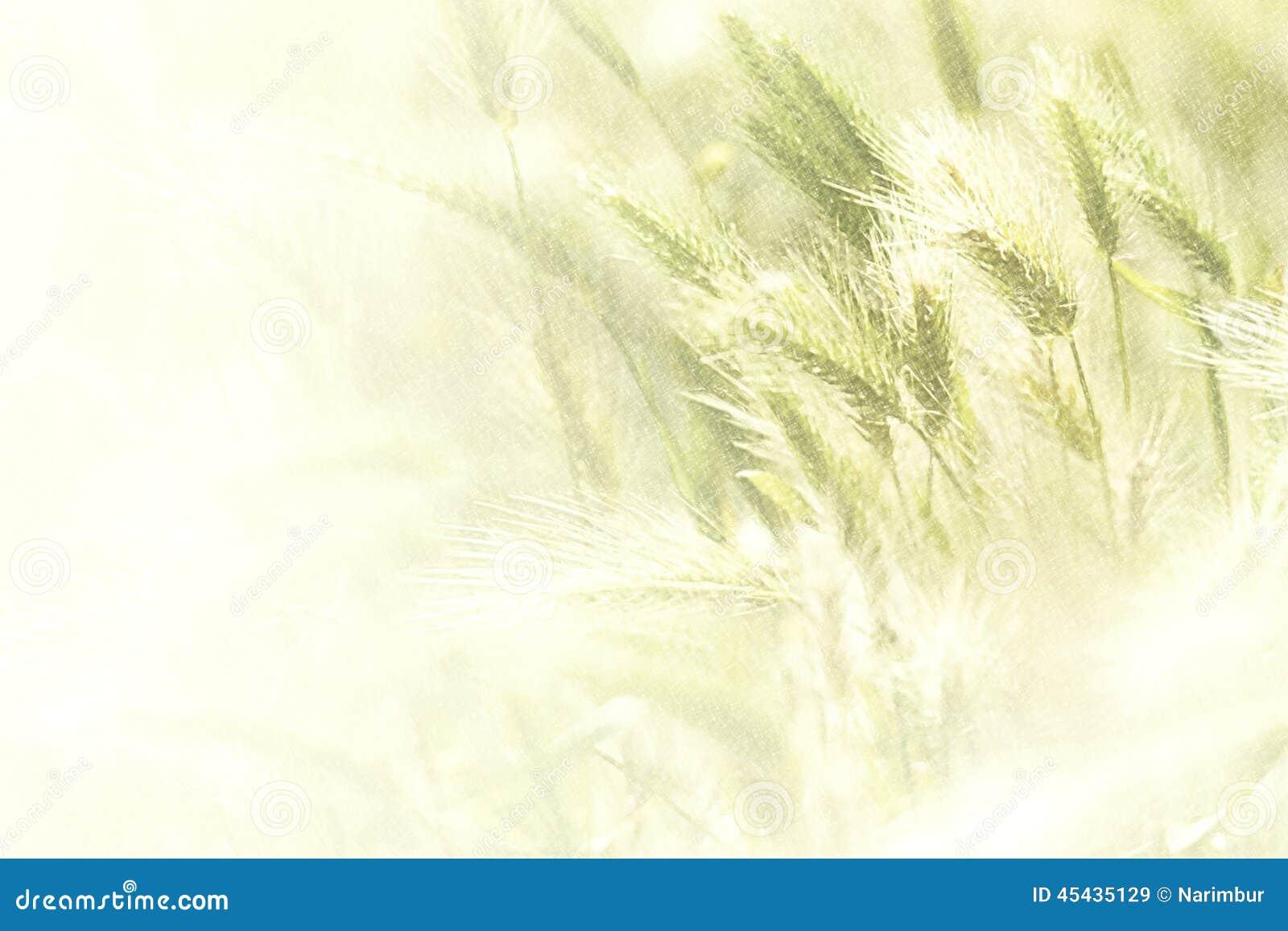 Ilustracja wiosny pszeniczny pole