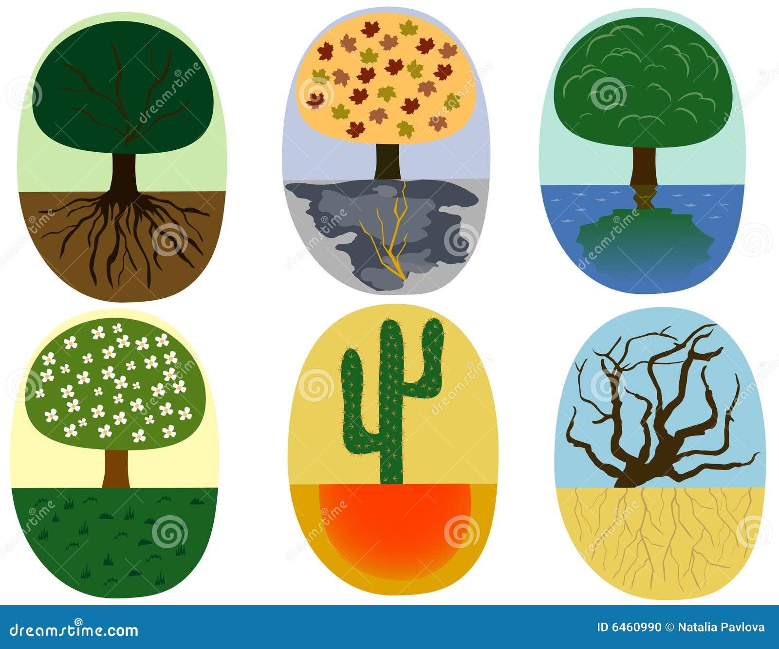 Ilustracji roślin
