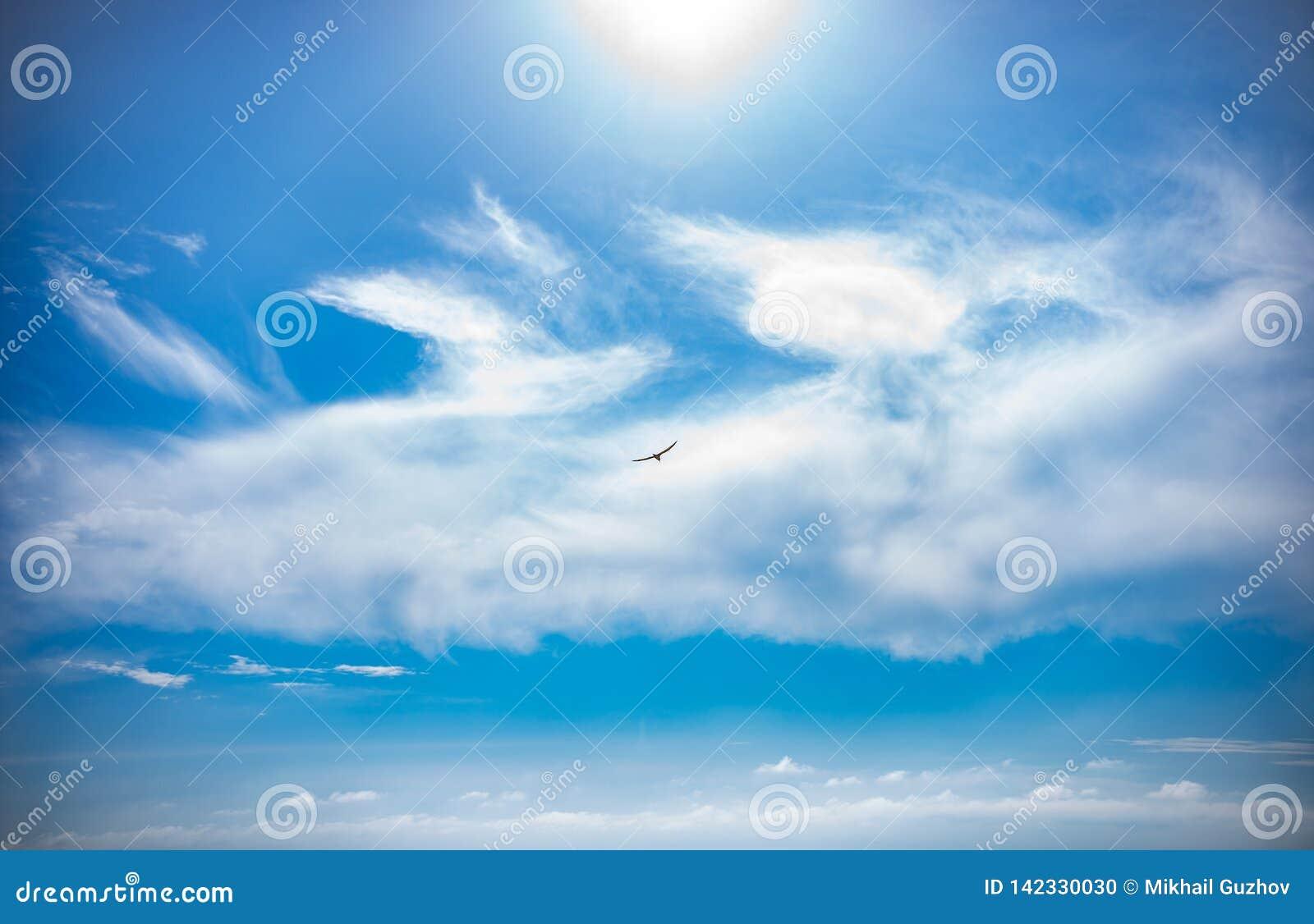 Im blauen Himmel über der Fliegen-Seevogel Seemöwe Schwarzen Meers