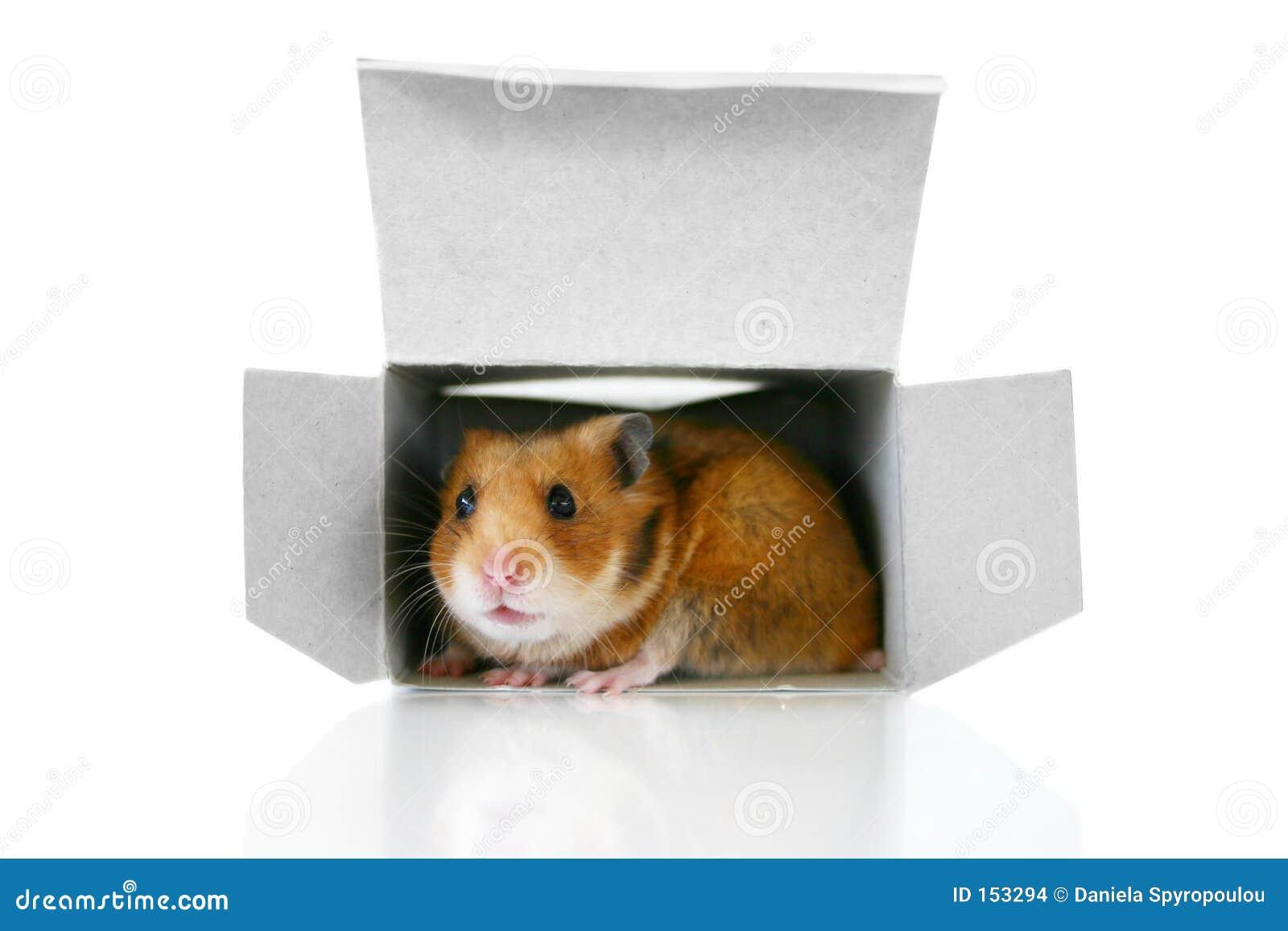 Im Kasten