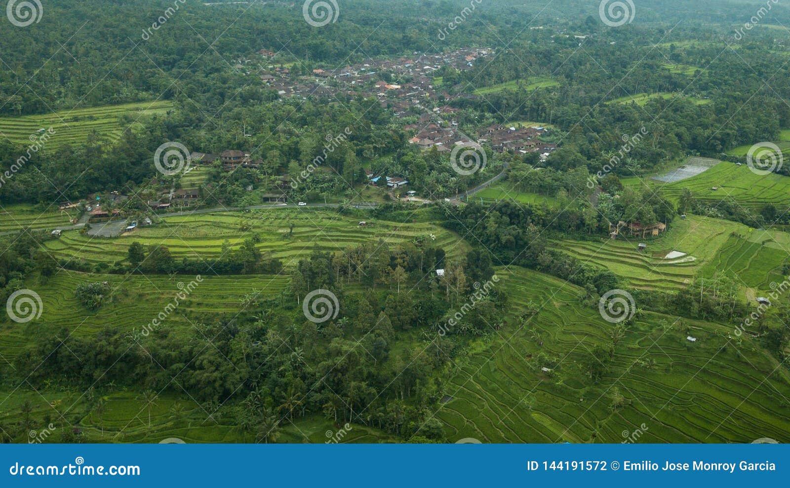 Image aérienne d une ville entourée par les paumes et la terrasse de riz