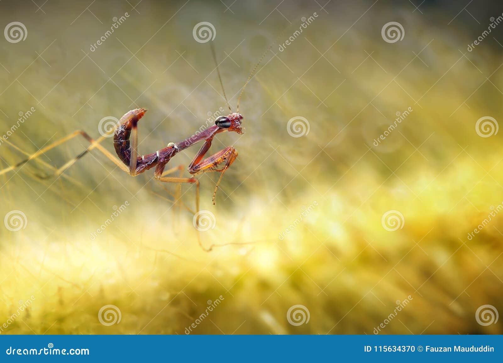 Cute Baby Mantis