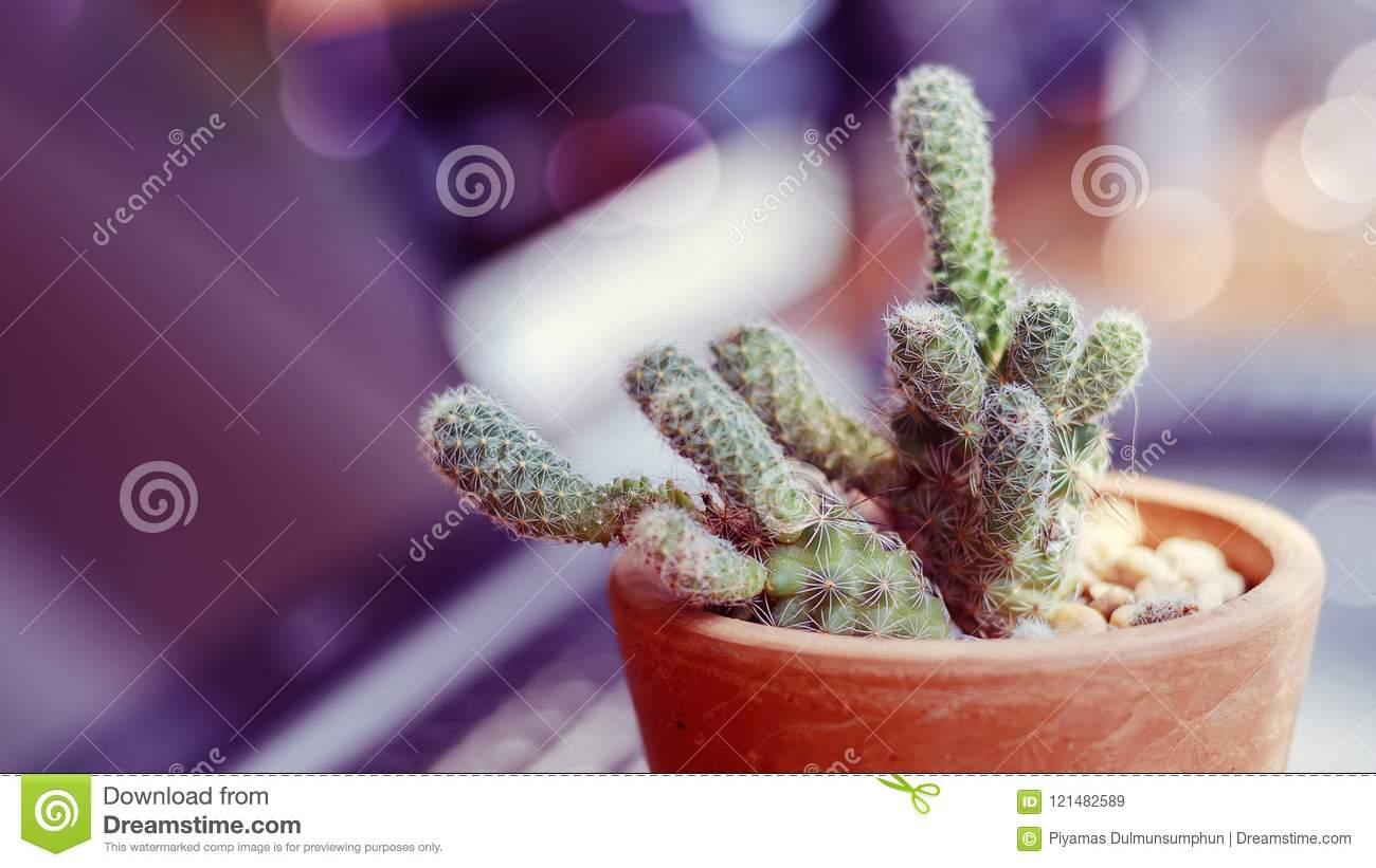 Image of cactus with old color filter style and bokeh light