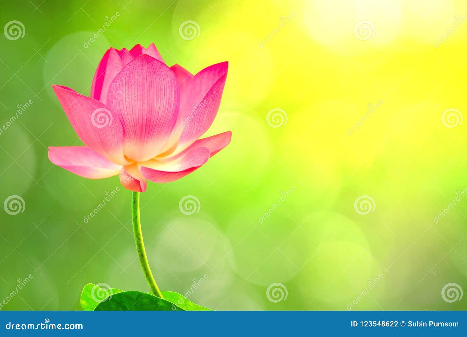 Image Courante Gratuite De Haute Qualite De Redevance D Une Fleur De