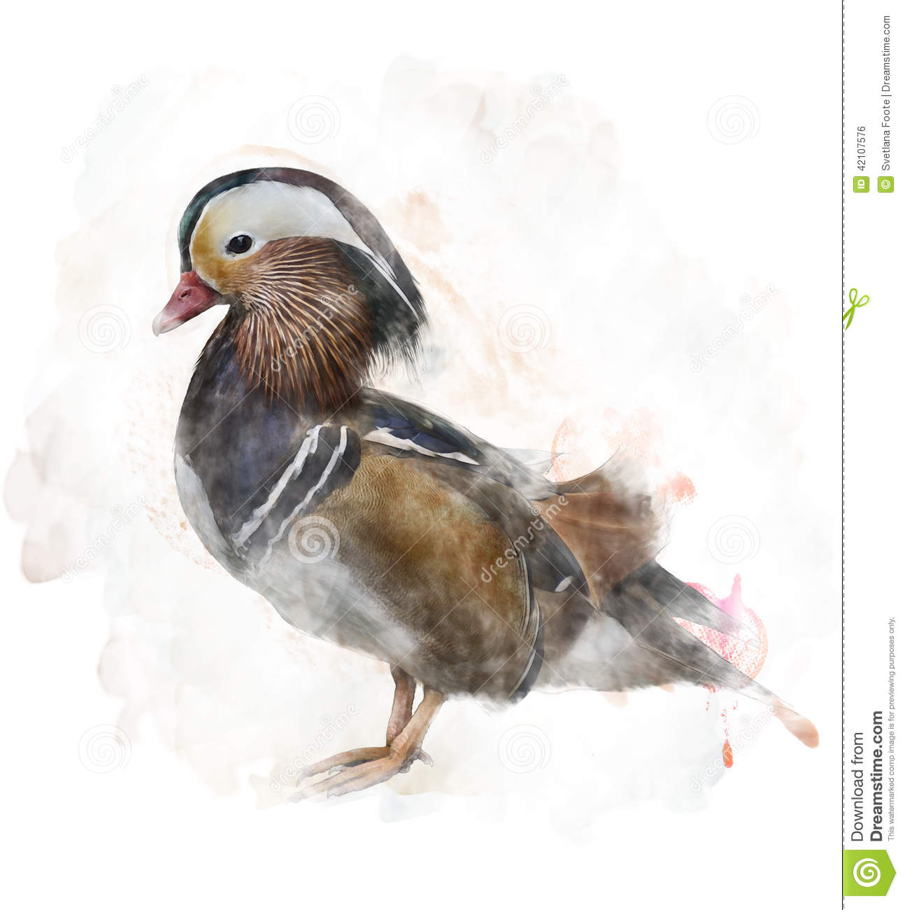 Image d 39 aquarelle d 39 un canard de mandarine illustration - Illustration canard ...