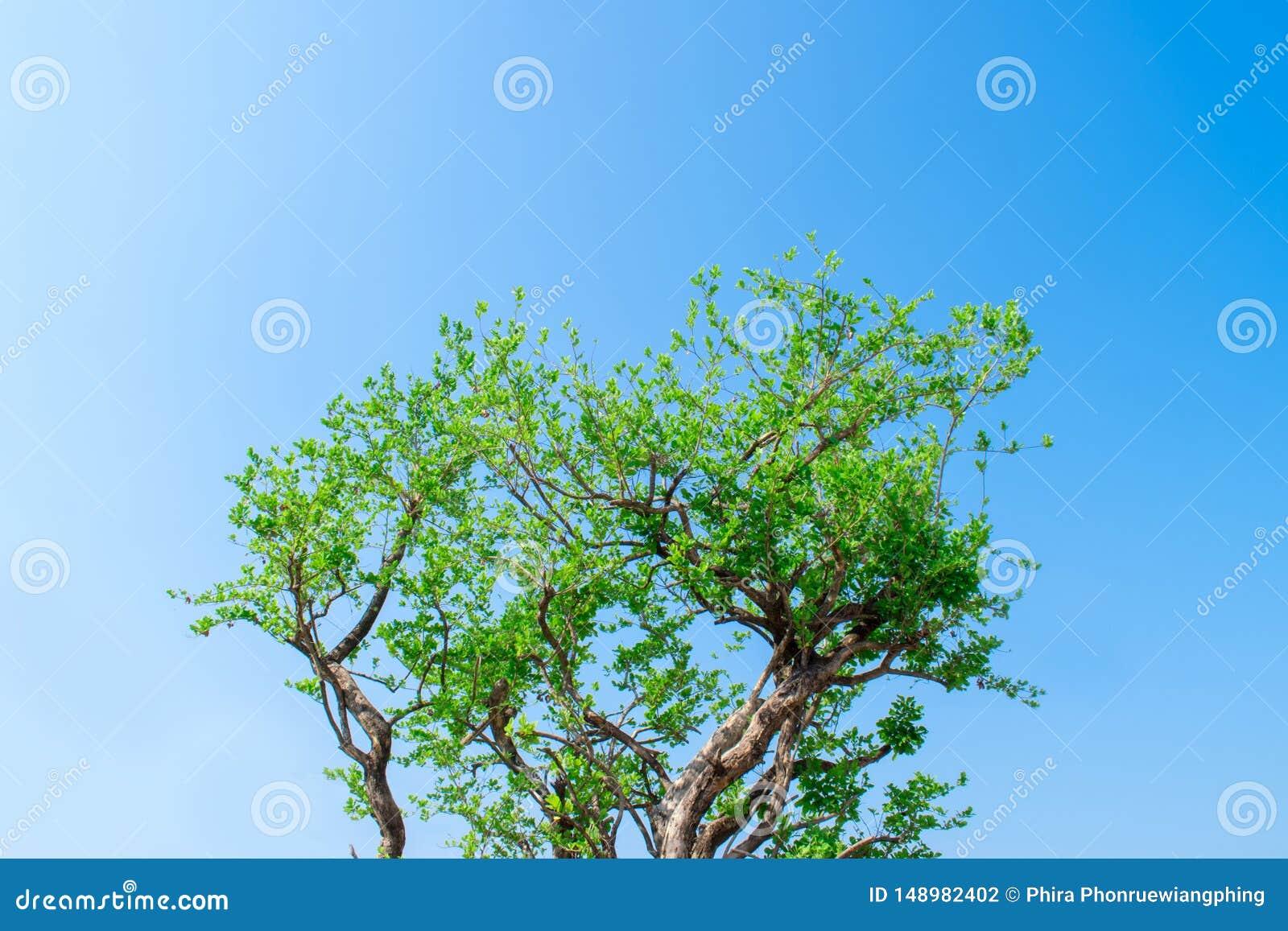 Image d une branche d arbre avec un ciel comme fond