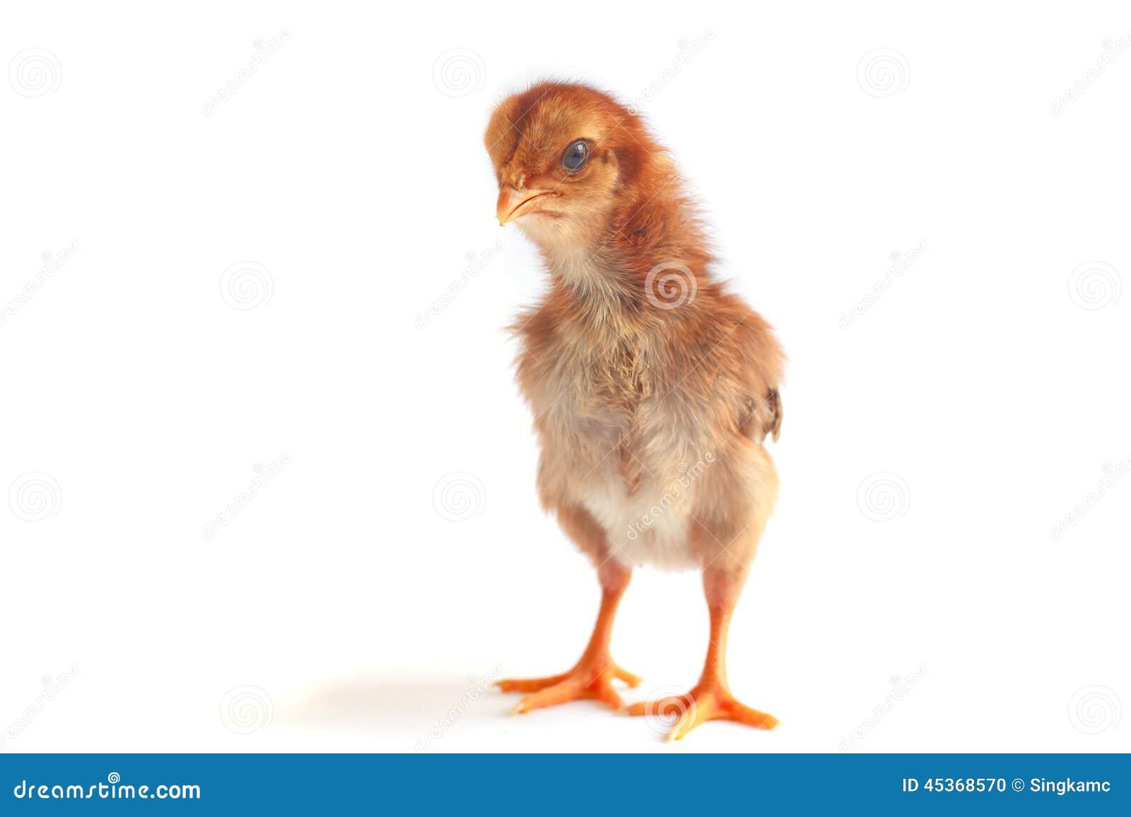 Image de bouillon de poulet de bébé