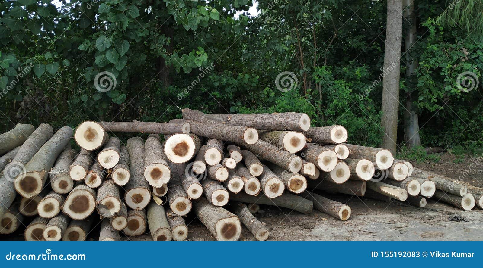 Image de déboisement des arbres dans la forêt