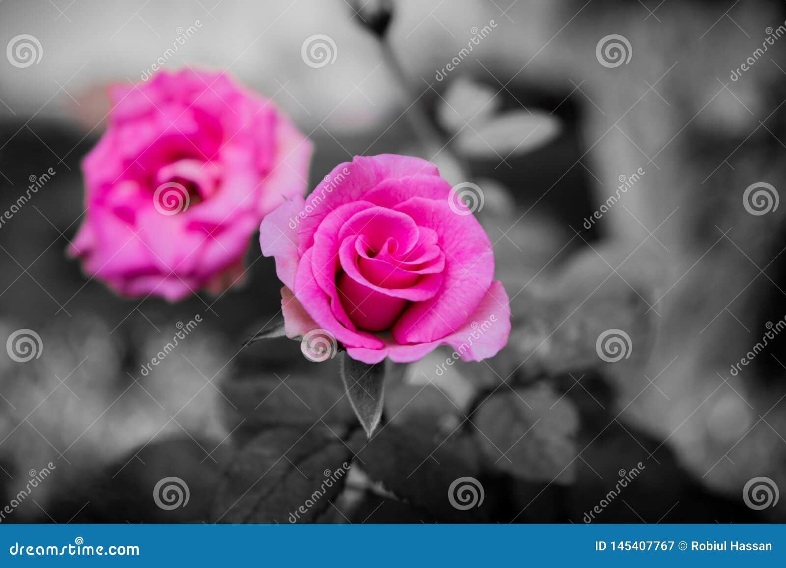 Image de fleur dans la for?t, image de fleur pour tout type de cartes de grettings