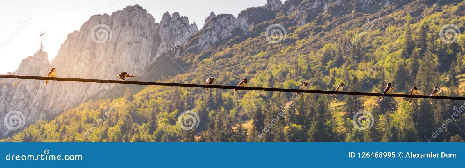Image des oiseaux se reposant sur une ligne électrique avec le coucher du soleil et le mountainlandscape à l arrière-plan