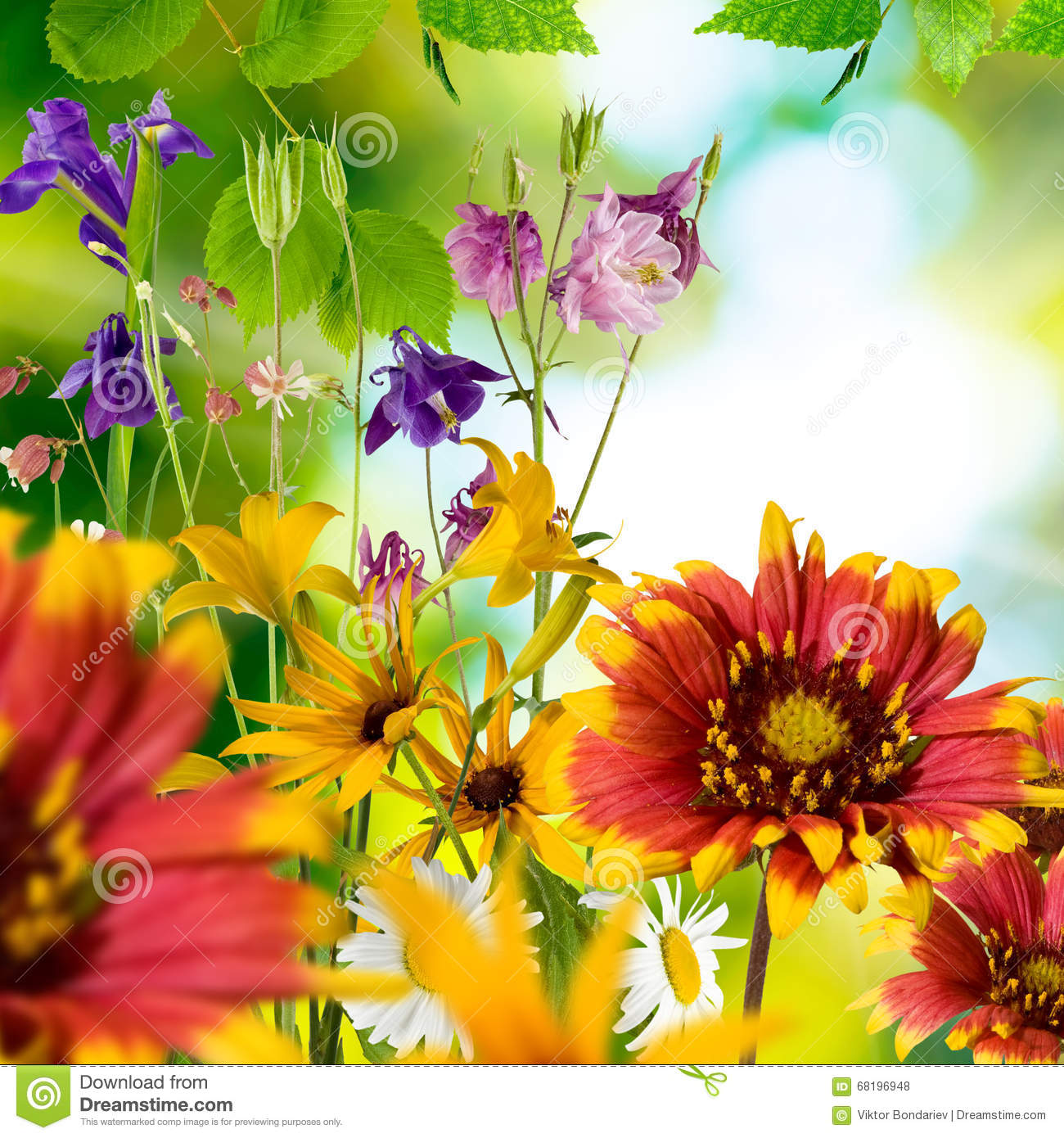 Image of different beautiful flowers in the garden stock photo image of different beautiful flowers in the garden izmirmasajfo