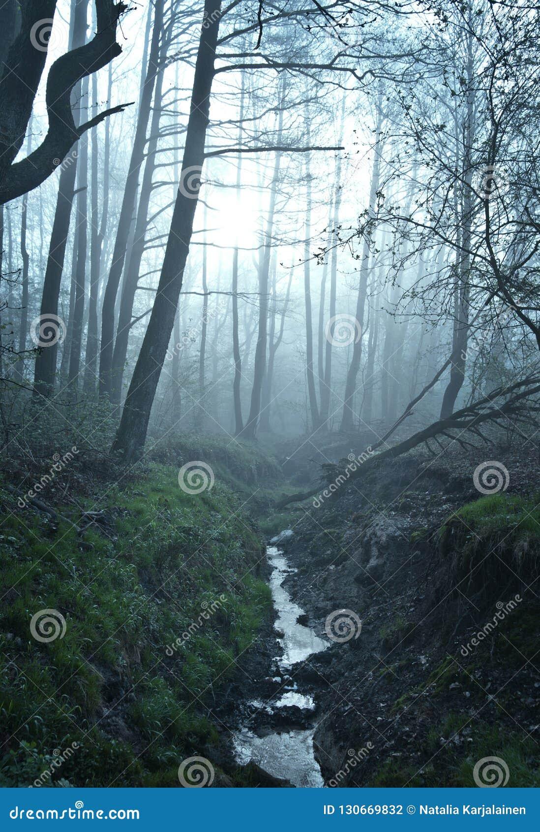 Image extérieure de nature de couleur d imagination de beaux-arts d une petites rivière/crique dans une forêt brumeuse d hiver av