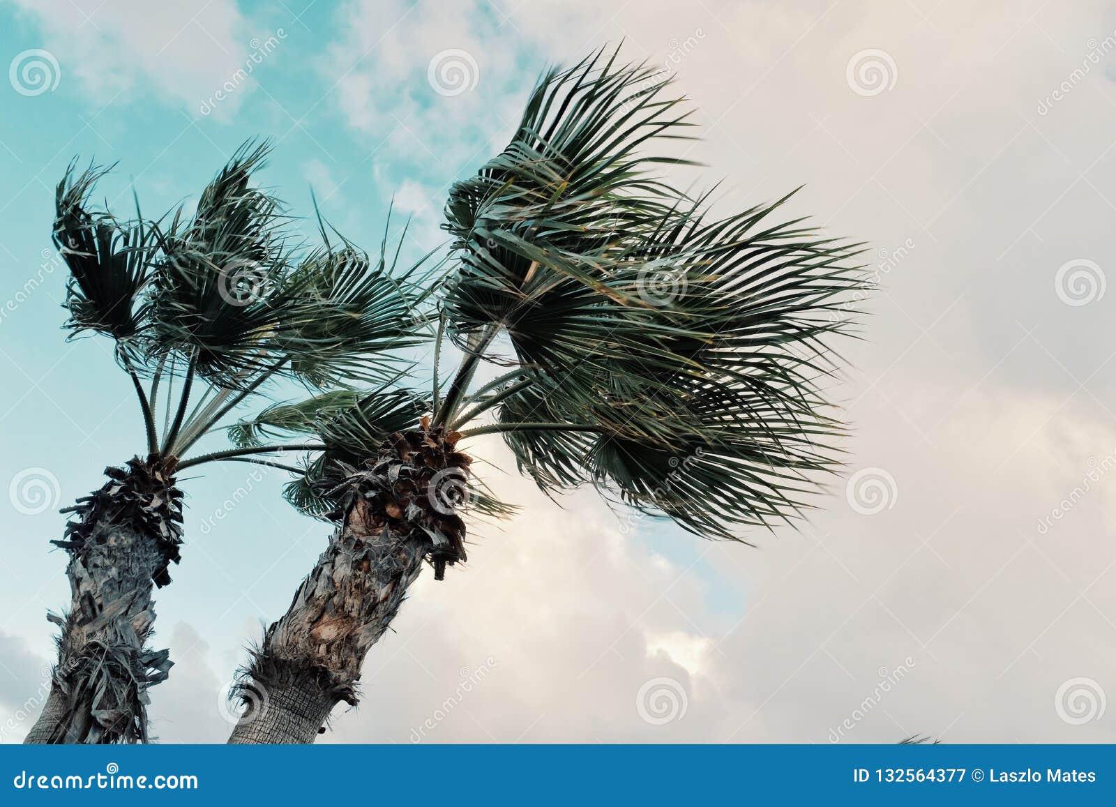 Image graphique minimale de concept des palmiers en vents violents devant des nuages de tempête