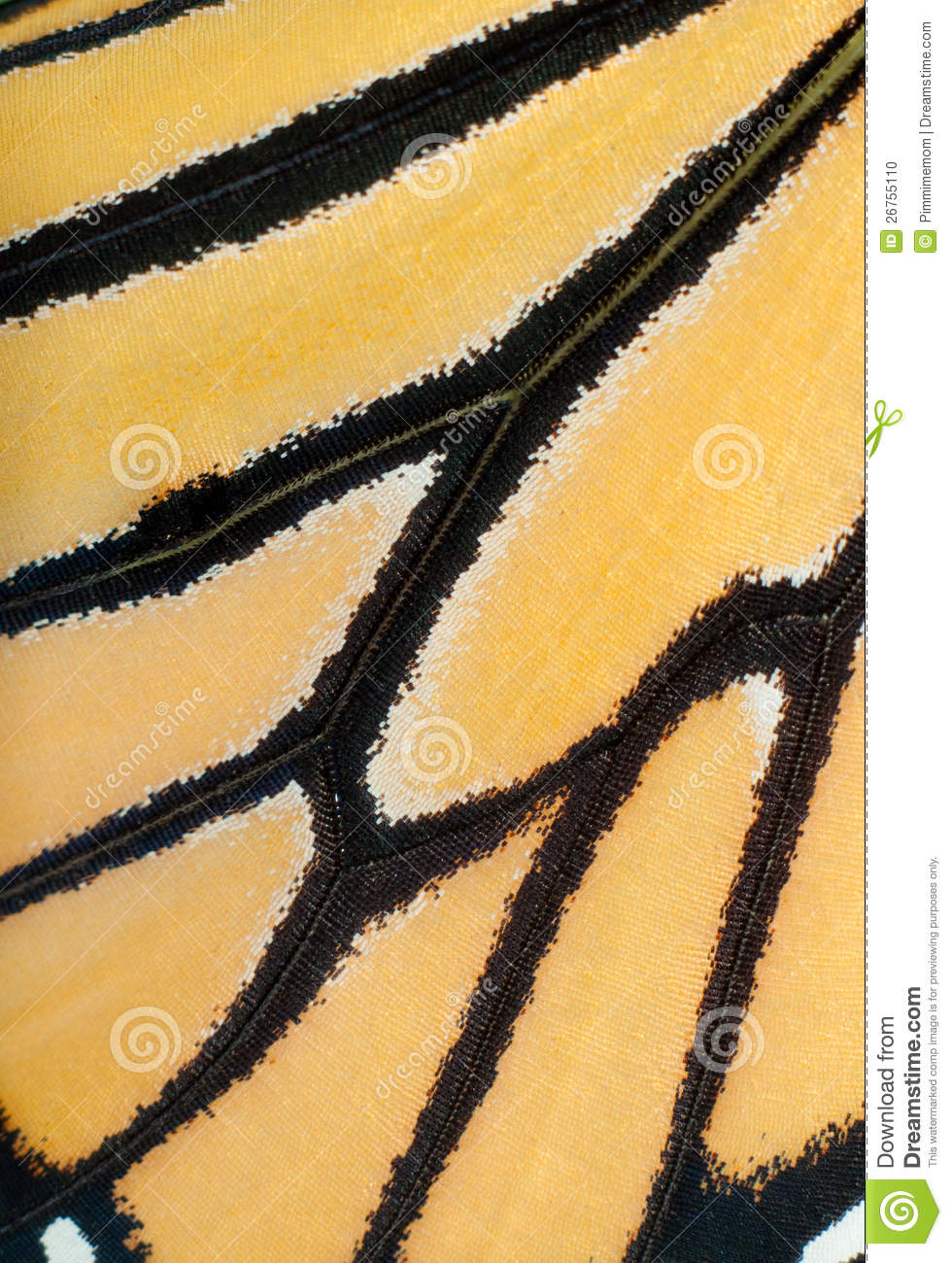 Image of a live Monarch butterfly wing