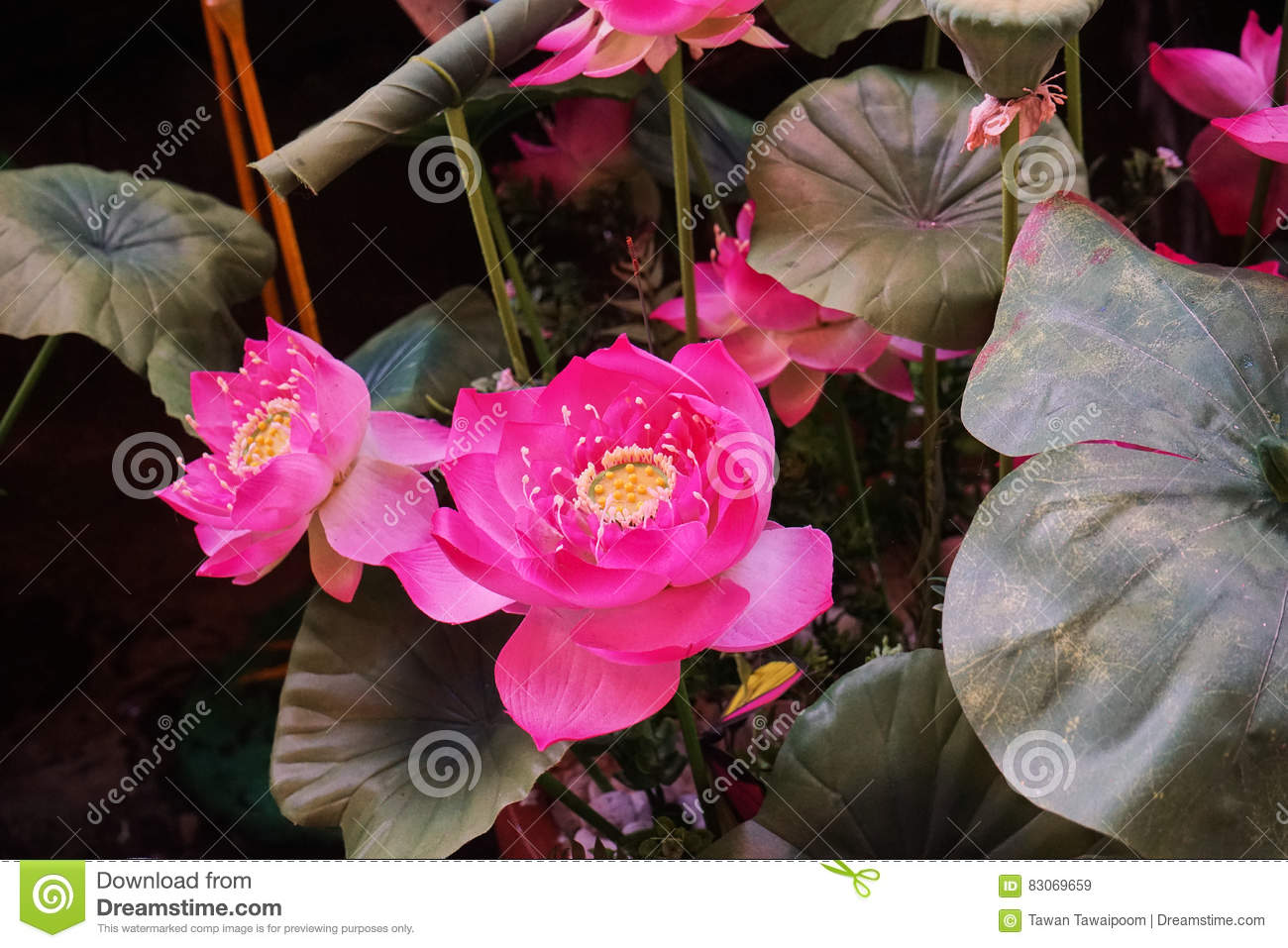 This Image Is About Lotus Bangkok Thailand Stock Illustration