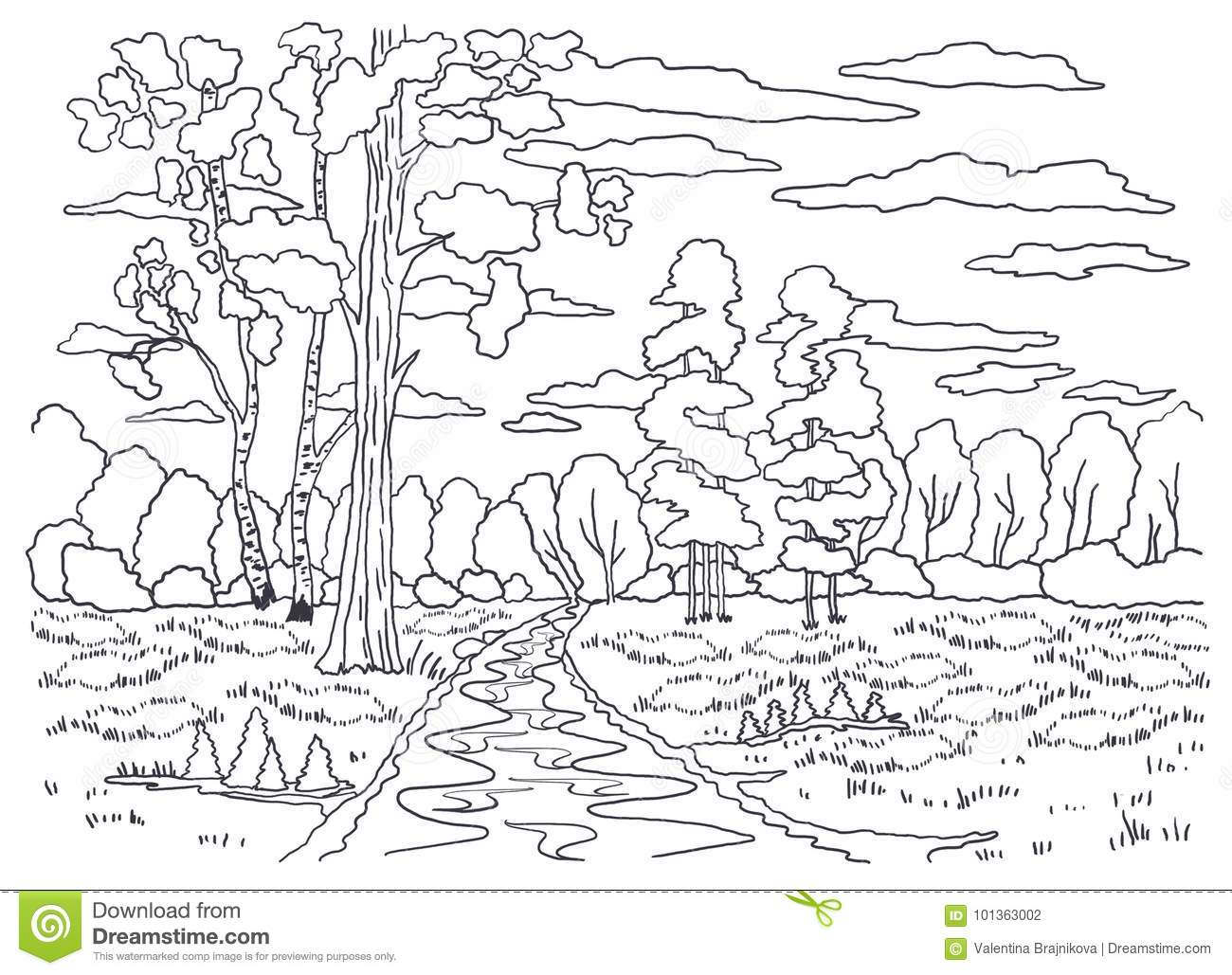 Template For Coloring. Landscape Painting. Forest, Trees, Birch ...