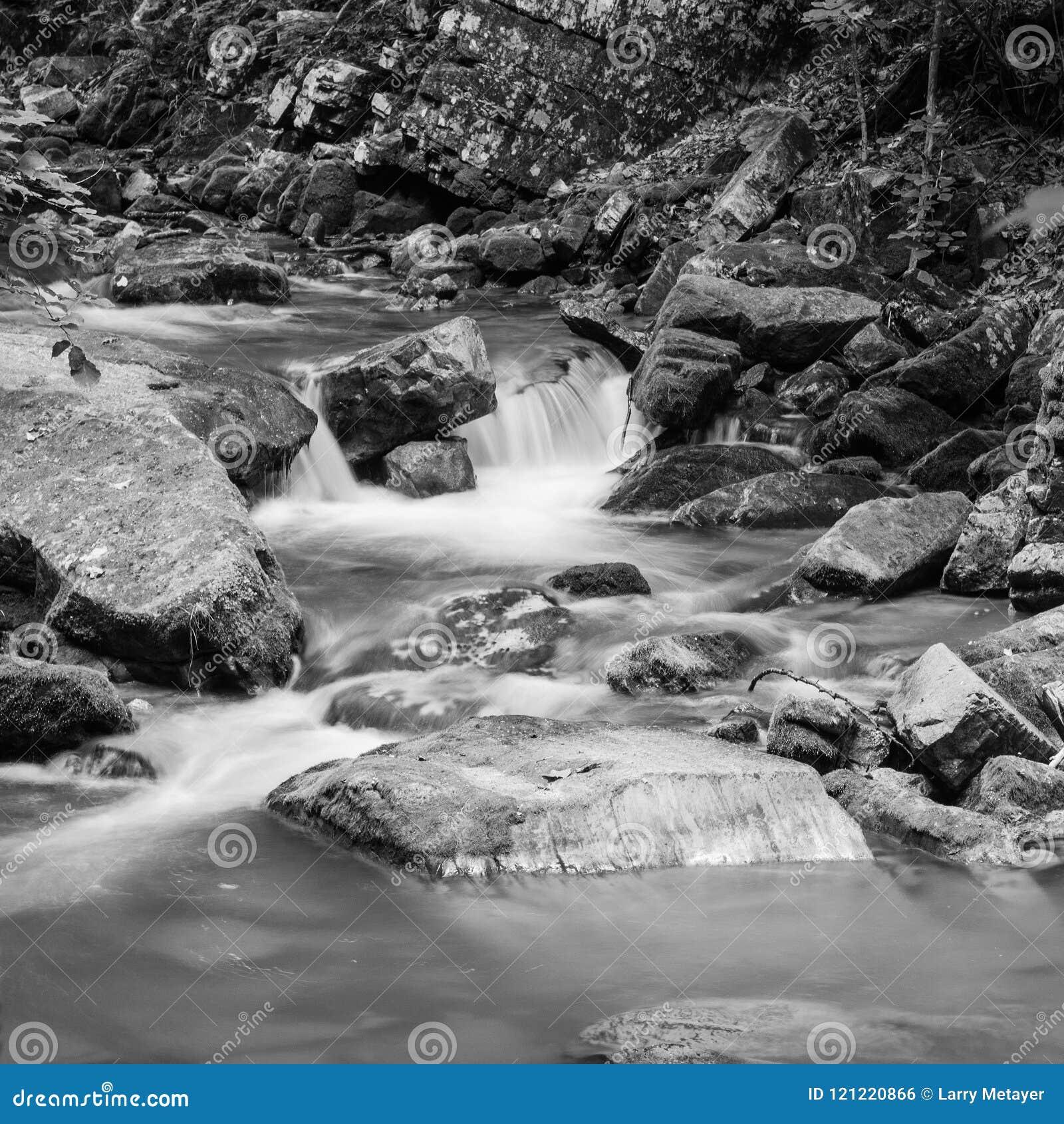 Image noire et blanche d un courant de région boisée en bois